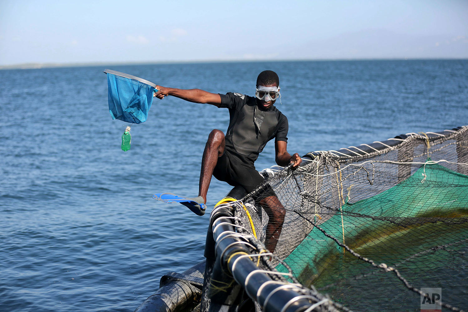 In this April 17, 2018 photo, a Taino Aqua Fish worker cleans a large fish cage on Lake Azuei in Fond Parisien, Haiti. The cages are cleaned out once a day, when workers remove some fish that were killed by very gusty wind, to avoid live fish from eating them. (AP Photo/Dieu Nalio Chery)