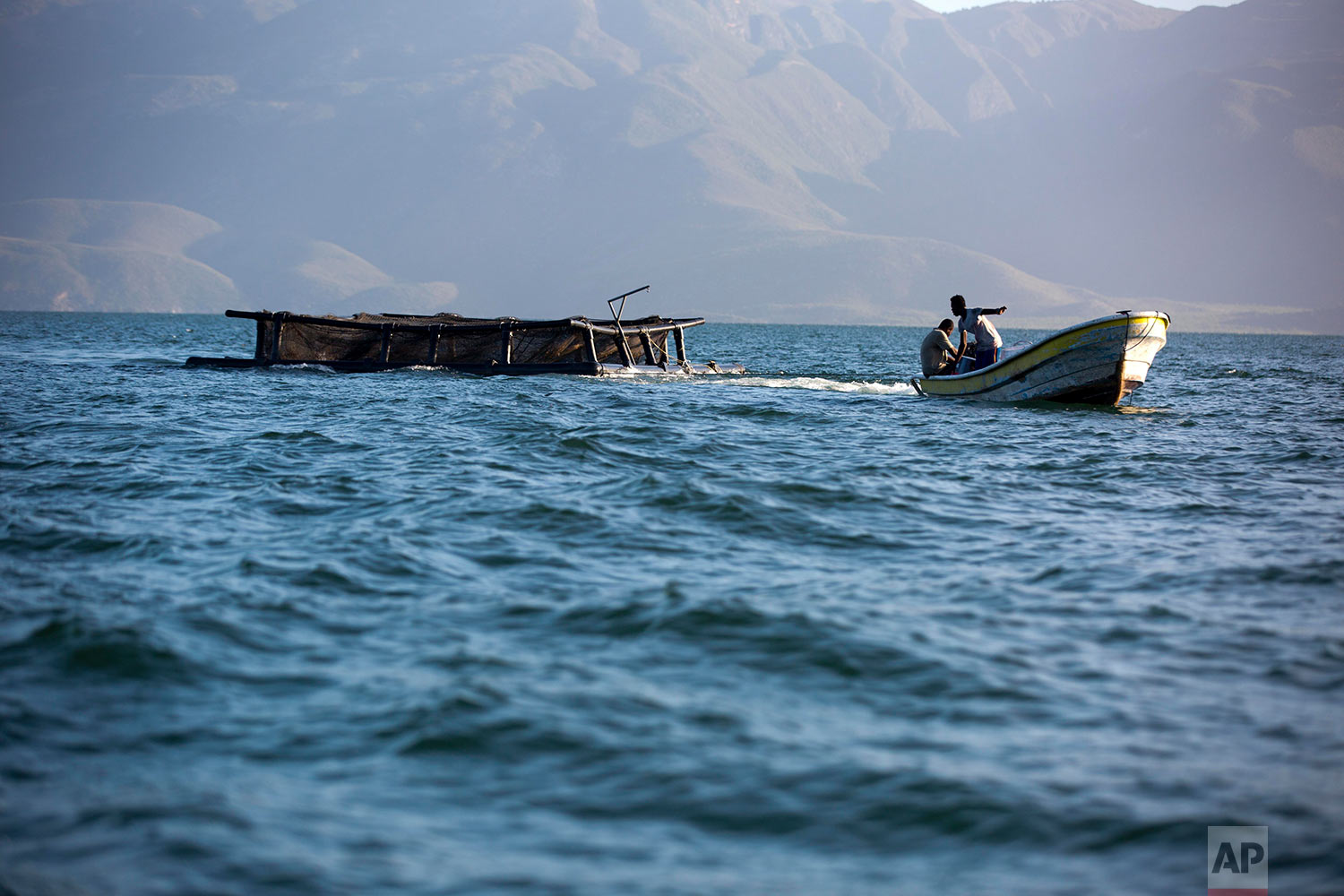 In this April 17, 2018 photo, Taino Aqua Fish workers pull a cage of tilapia to shore on Lake Azuei Fond Parisien, Haiti. Hans and Patrick Woolley left careers in online startups and hospital administration in Los Angeles and New York to invest in their home country and try their luck at fish farming in the lake, which is less than an hour away from Haiti's capital of Port-au-Prince. (AP Photo/Dieu Nalio Chery)