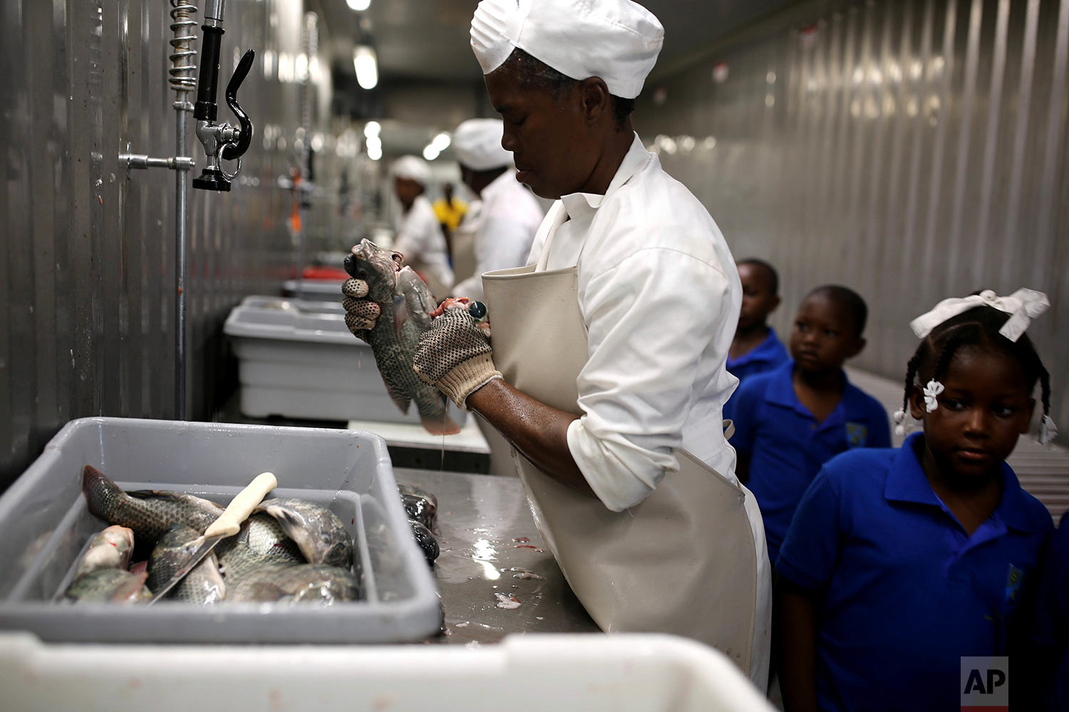 In this April 17, 2018 photo, a Taino Aqua Fish worker cleans tilapia as children take a field trip to the company on Lake Azuei in Fond Parisien, Haiti. One of the company's goals is to make fish affordable for all Haitians. (AP Photo/Dieu Nalio Chery)