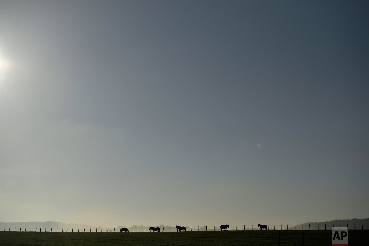 A group of horses graze during a spring day in Burguete, northern Spain on Sunday, May 6, 2018. (AP Photo/Alvaro Barrientos)