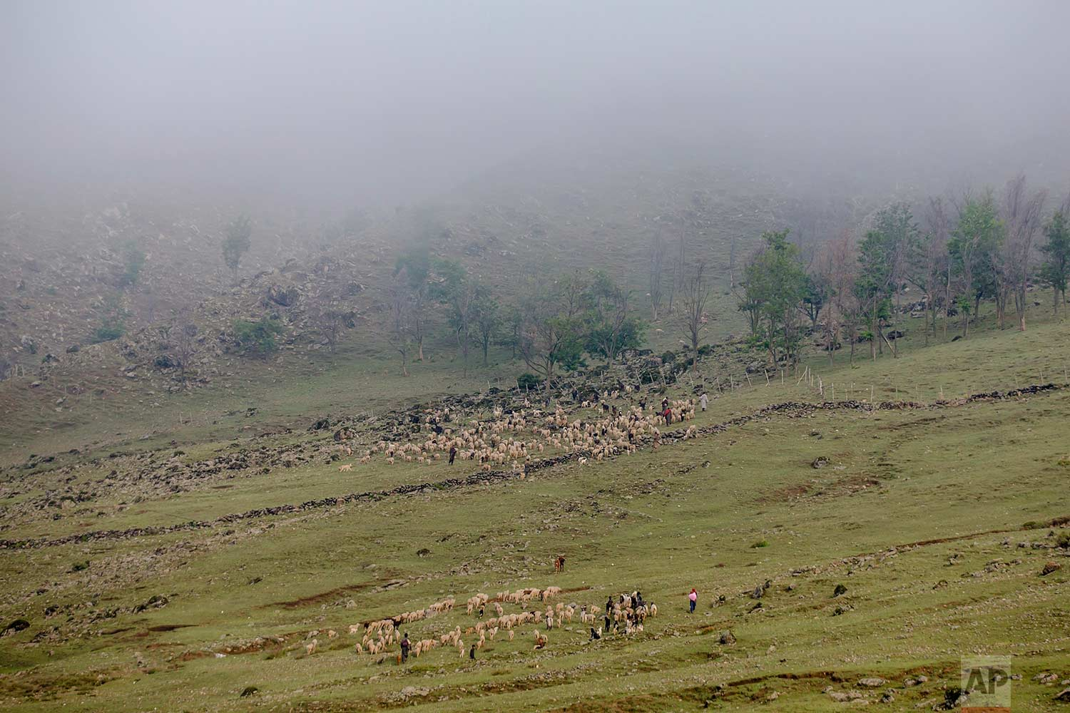 In this May 15, 2018 photo, Kashmiri nomadic Bakarwals lead the heard of sheep and goats at the base of a mountain pass on their way to Sonmarg, outskirts of Srinagar, Indian controlled Kashmir. (AP Photo/Dar Yasin)