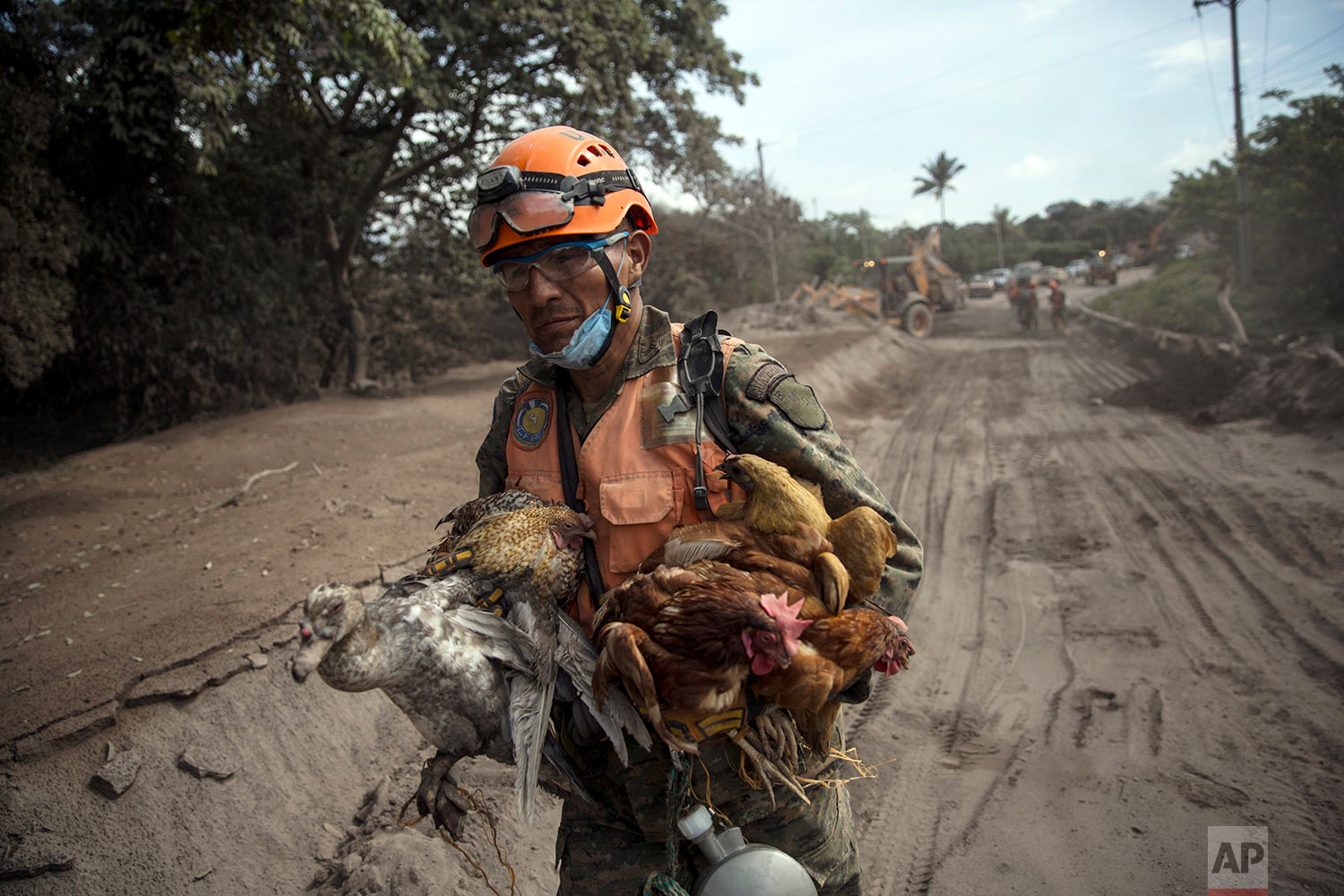 "A rescue worker carries rescued animals from the destroyed houses due to the Volcan de Fuego, or ""Volcano of Fire,"" in  El Rodeo, Escuintla, Guatemala, Wednesday, June 6, 2018. (AP Photo/Rodrigo Abd)"