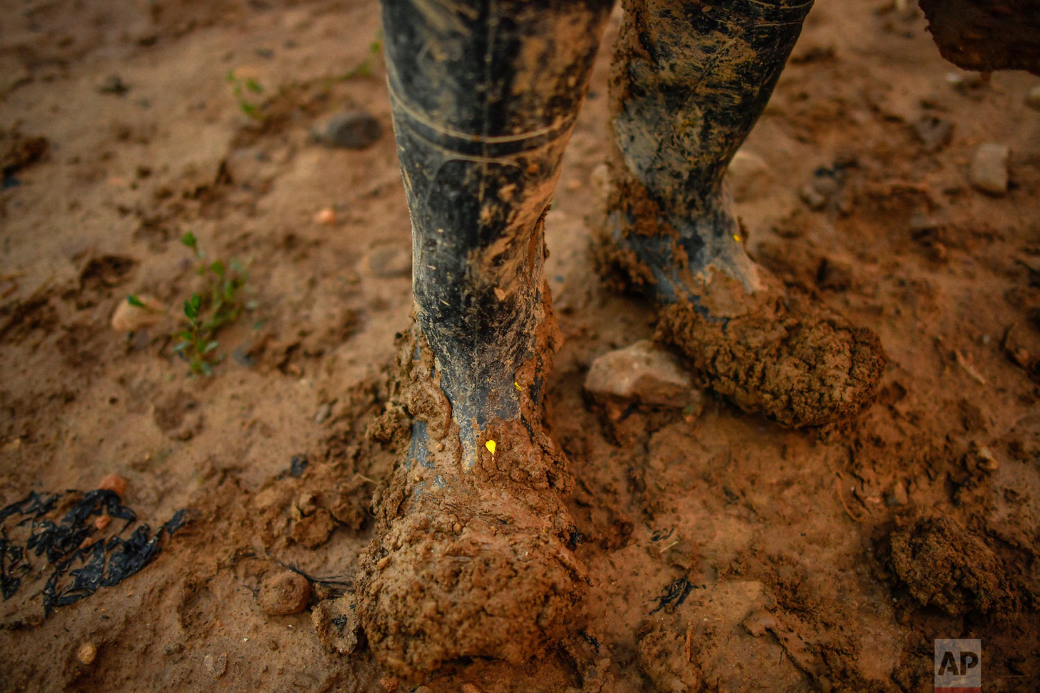 Temporary worker Evin, 25, from Cameroon, pauses on his job in his muddy boots, as he collects white asparagus from a field in Caparroso, around 85 km (52 miles) from Pamplona, northern Spain on Thursday, May 31, 2018 photo. (AP Photo/Alvaro Barrientos)