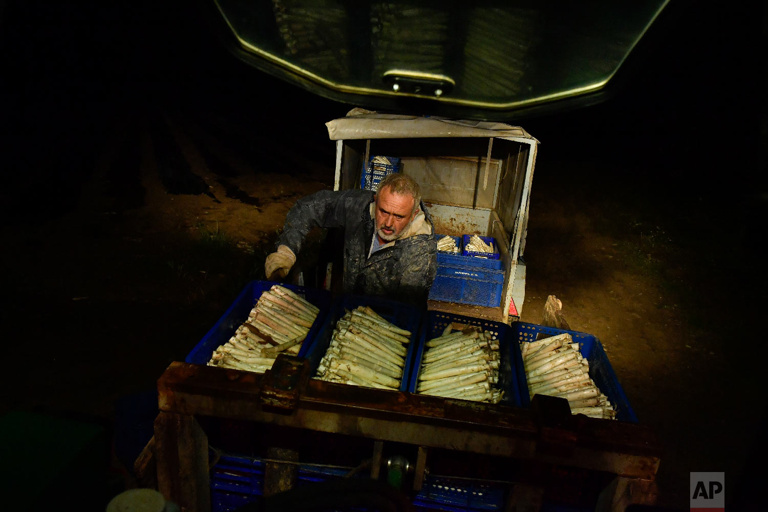 Pedro Pascual, 53, arranges white asparagus after collecting them from a field in Caparroso, around 85 km (52 miles) from Pamplona, northern Spain on Thursday, May 31, 2018. (AP Photo/Alvaro Barrientos)