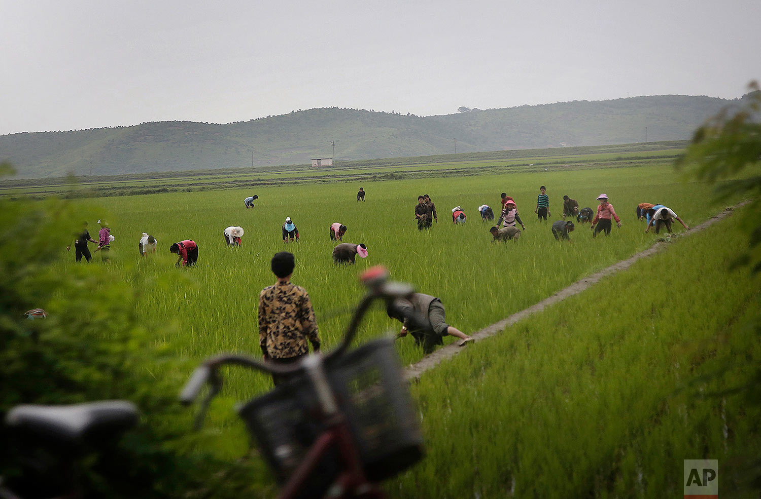 Men and women work in a rice field in Kangwon province, eastern North Korea, on June 23, 2016. The capital of Kangwon province is Wonsan, which is located along the eastern side of the Korean Peninsula and was one of the cities chosen to be developed into a summer destination for locals and tourists. (AP Photo/Wong Maye-E)