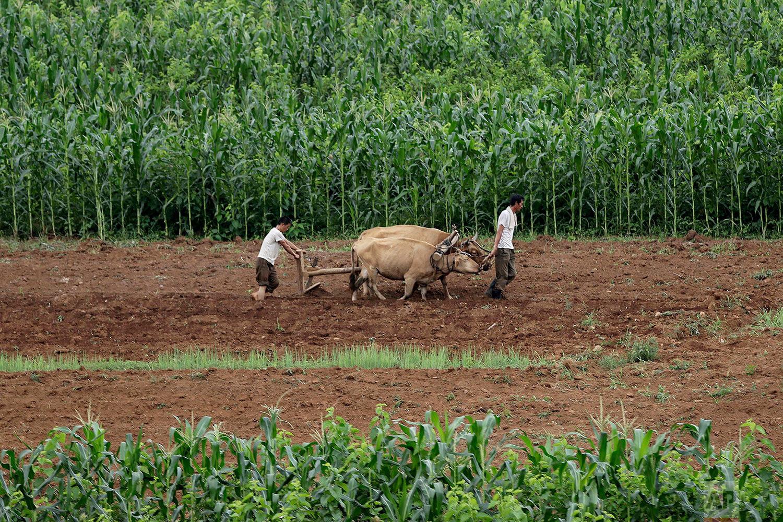 Men plow fields along the Pyongyang-Wonsan highway in Sangwon, North Korea, near Pyongyang, on July 20, 2017. (AP Photo/Wong Maye-E)