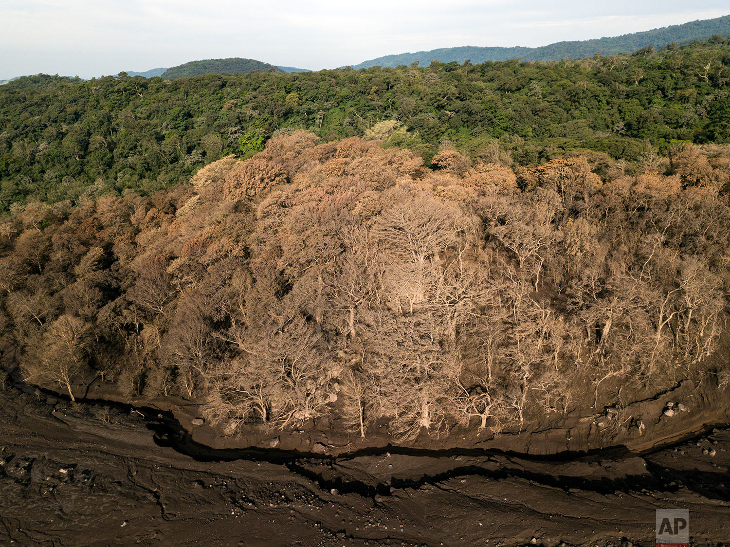 In this June 18, 2018 photo, trees stand burned along the path that volcanic ash and rock plowed through during the eruption of the Volcano of Fire in San Miguel Los Lotes, Guatemala. (AP Photo/Rodrigo Abd)