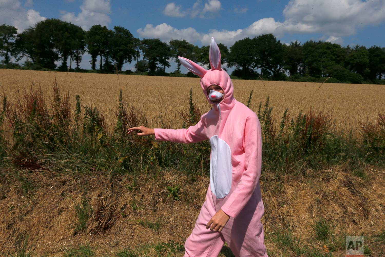 A spectator in a bunny costume waits for the pack of riders to pass during the sixth stage of the Tour de France cycling race over 181 kilometers (112.5 miles) with start in Brest and finish in Mur-de-Bretagne Guerledan, France, Thursday, July 12, 2018. (AP Photo/Peter Dejong)