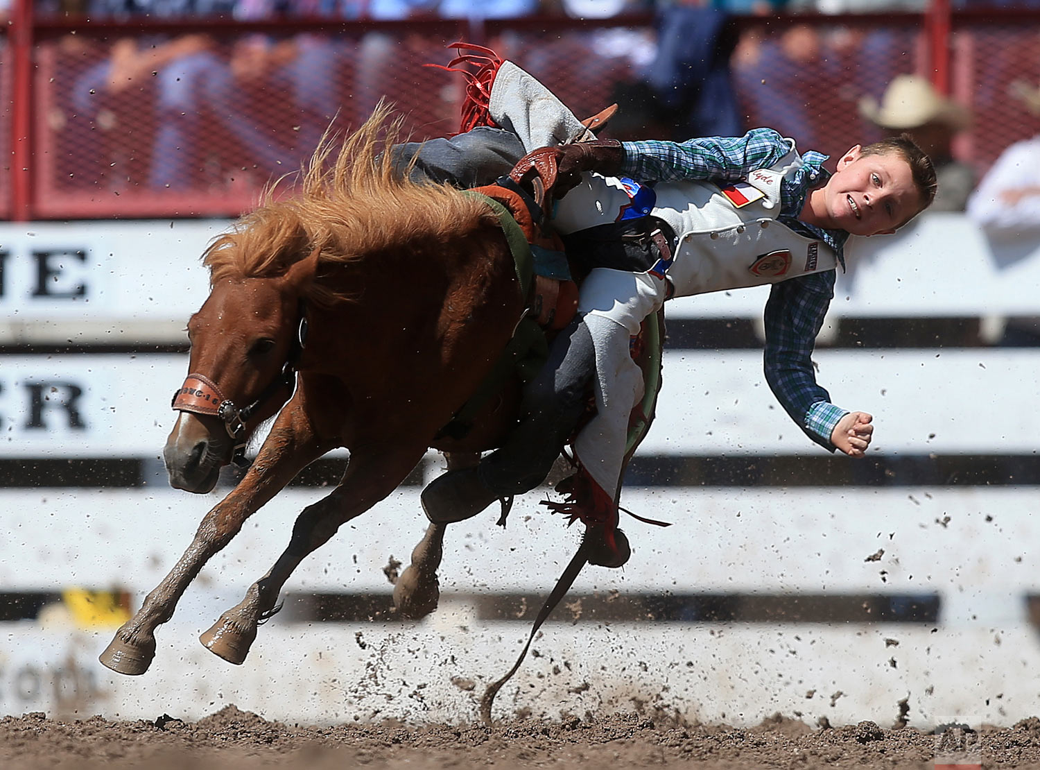 Clyde Cooper competes in the Little Buckers mini bull riders event during the 122nd annual Cheyenne Frontier Days Rodeo on Thursday, July 26, 2018, in Cheyenne, Wyo. (Blaine McCartney/The Wyoming Tribune Eagle via AP)