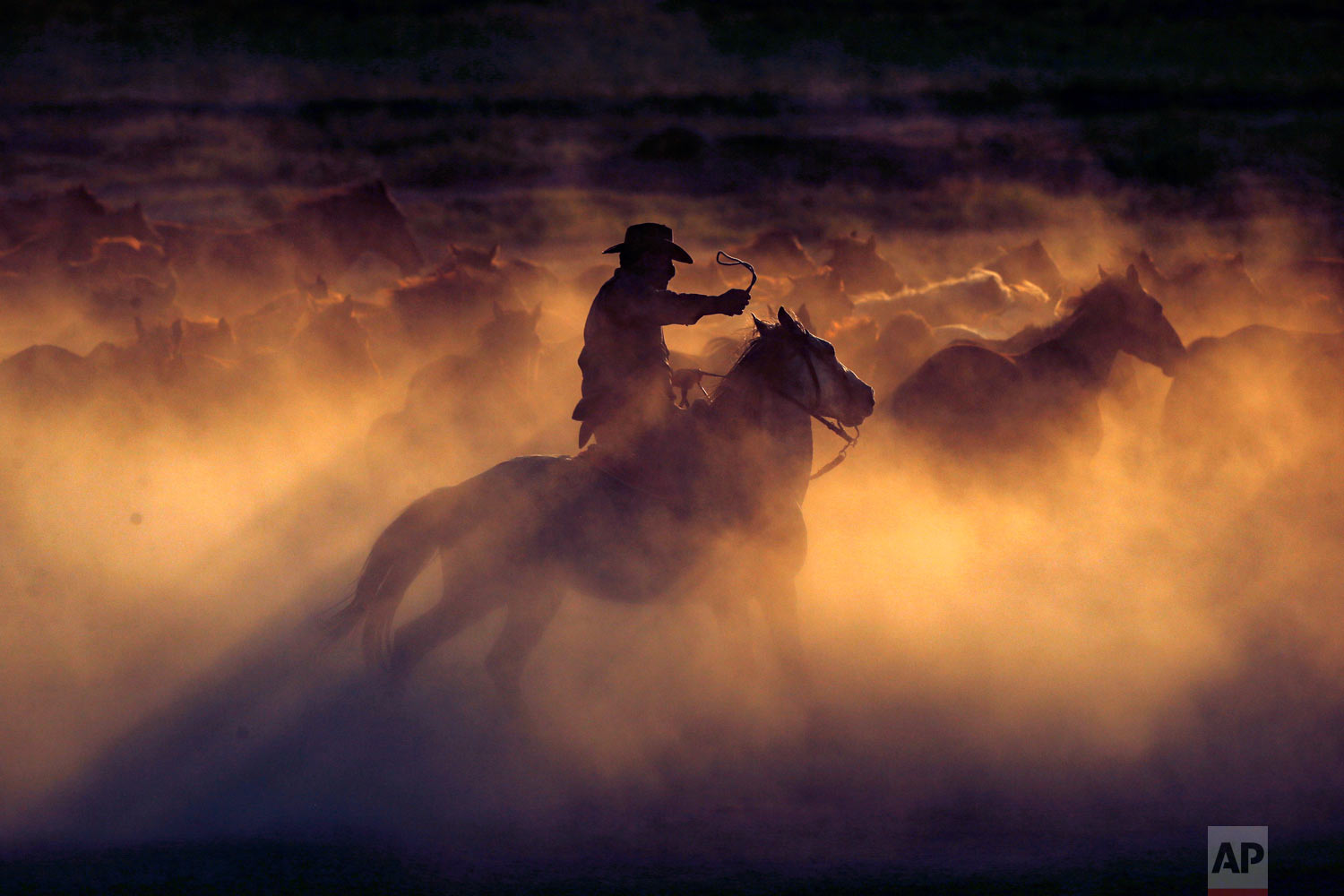 """Ali Kemer, a 50-year-old horse-breeder, herds horses in the village of Hormetci, on the foothill of Mount Erciyes, in the central Anatolian province of Kayseri, Turkey on Sunday, Aug. 5, 2018. Kemer is a third-generation horse breeder in the village where the residents have a special affinity with the """"yilki,"""" as the untamed horses are called. He cares for about 350 of them and charges visitors 50 Turkish lira (US $8) to photograph the horses, money he says he uses for their upkeep. Thousands of other wild horses roam free on the mountains and plains of Turkey's Anatolia region, the descendants of horses that were abandoned by farmers. (AP Photo/Emrah Gurel)"""