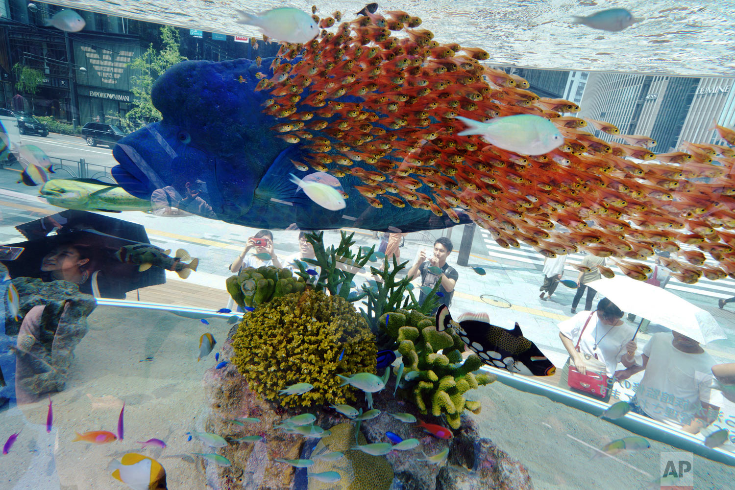 Passers-by look at fish swimming in a large tank in the Ginza shopping district of Tokyo on Tuesday, Aug. 28, 2018. (AP Photo/Eugene Hoshiko)