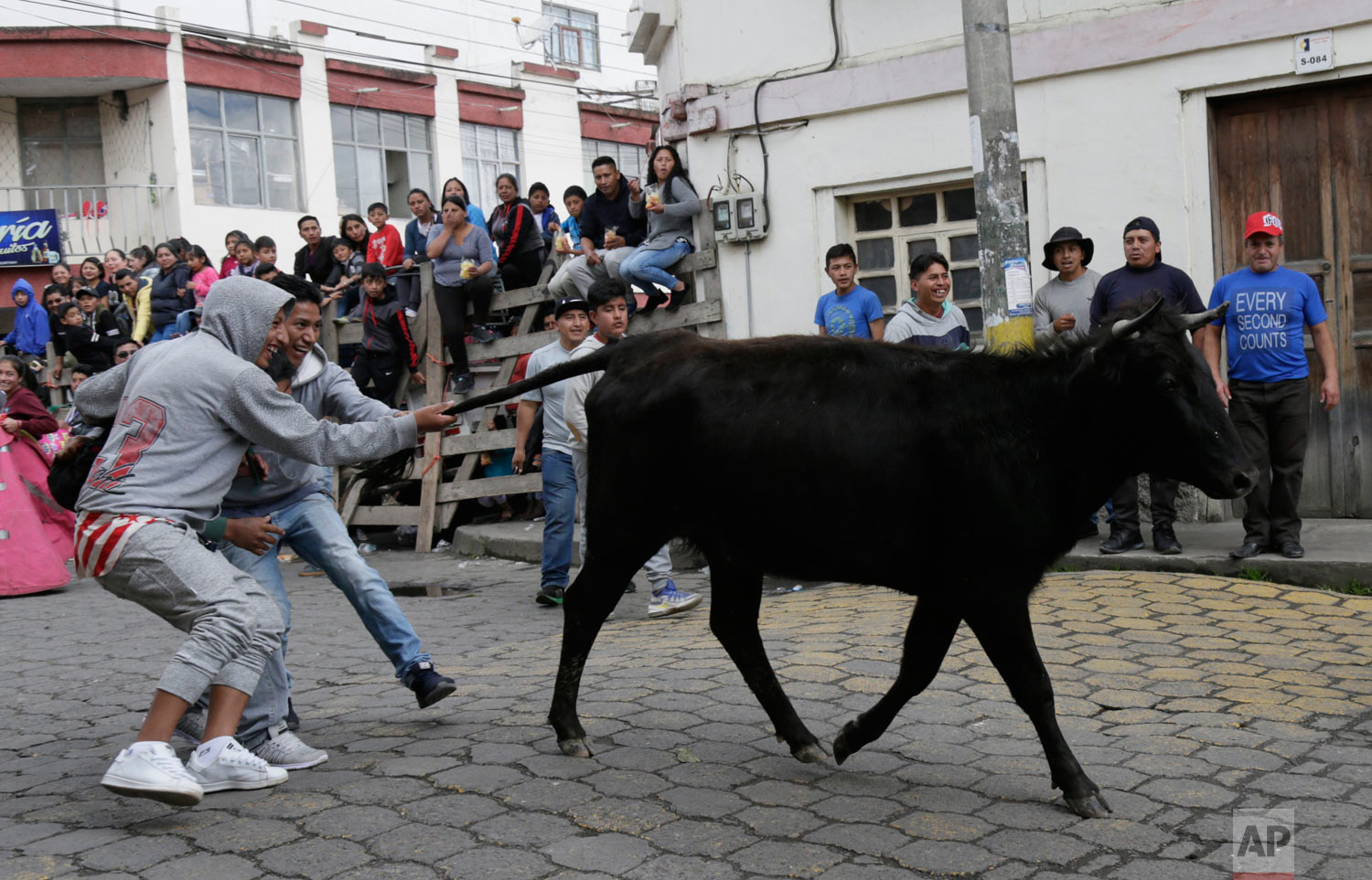 Men pull on the tail of a young bull during the running of the bulls in Pillaro, Ecuador, Aug. 4, 2018. Dozens of bulls run through this small Andean city and allowed spontaneous bullfighters shine with their pirouettes and with more than one accident among the curious. (AP Photo/Dolores Ochoa)