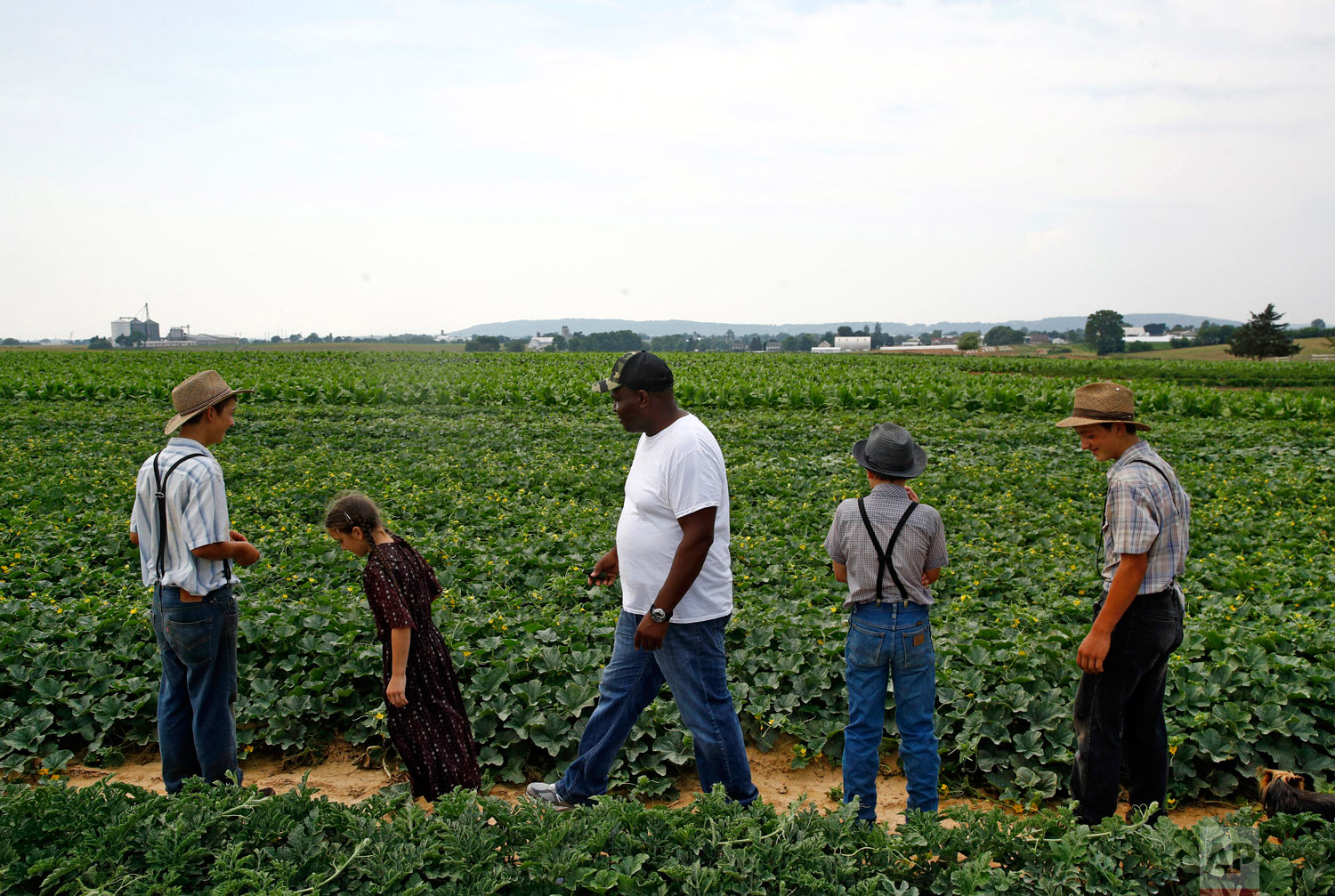 James Chase, center, the leader of a Baltimore arabber stable, walks in a field with children belonging to an Old Order Mennonite family on June 18, 2018, at the family's farm in New Holland, Pennsylvania. (AP Photo/Patrick Semansky)