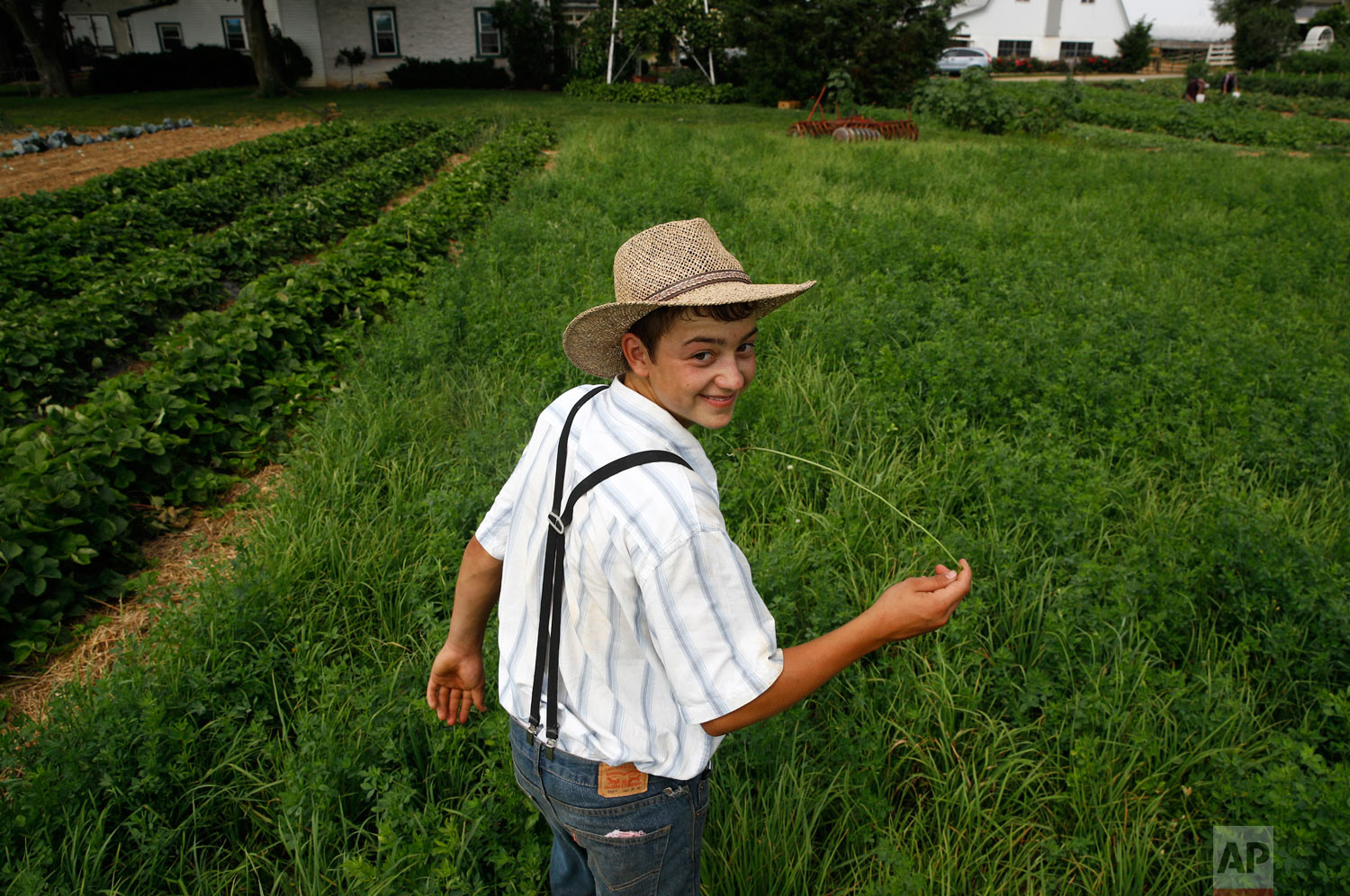 A boy belonging to an Old Order Mennonite family walks in a field on June 18, 2018, at his family's farm in New Holland, Pennsylvania. (AP Photo/Patrick Semansky)