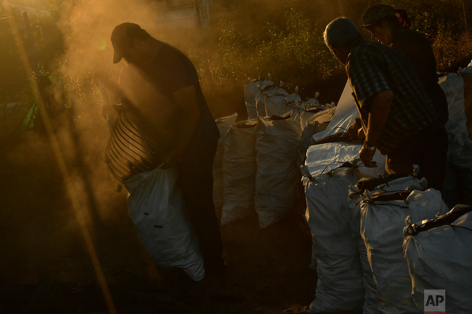 In this Tuesday, Sept.11, 2018 photo, Arkaitz Lander, 22, picks up charcoal putting it in sacks, as part of a process to produce traditional charcoal in Viloria, northern Spain. (AP Photo/Alvaro Barrientos)