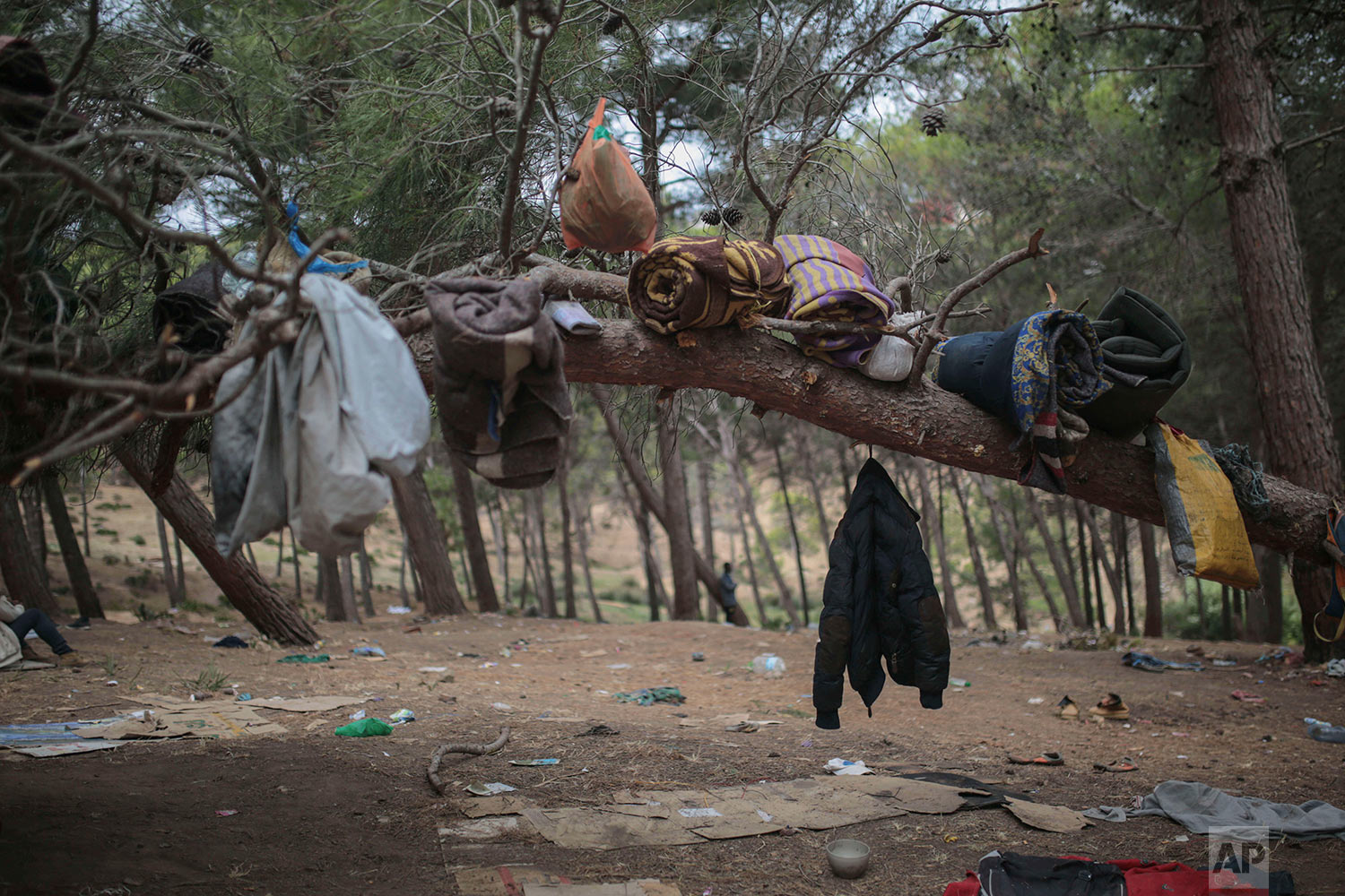 Sub-Saharan migrants aiming to cross to Europe are hung on a tree in a forest they had taken shelter in, Sept. 8, 2018, near Masnana, on the outskirts of Tangier, Morocco. (AP Photo/Mosa'ab Elshamy)