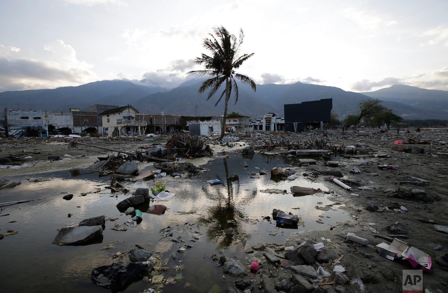 A lone tree stands in the debris from structures that were wiped out after a massive earthquake and tsunami hit Palu, Central Sulawesi, Indonesia Thursday, Oct. 4, 2018. (AP Photo/Aaron Favila)