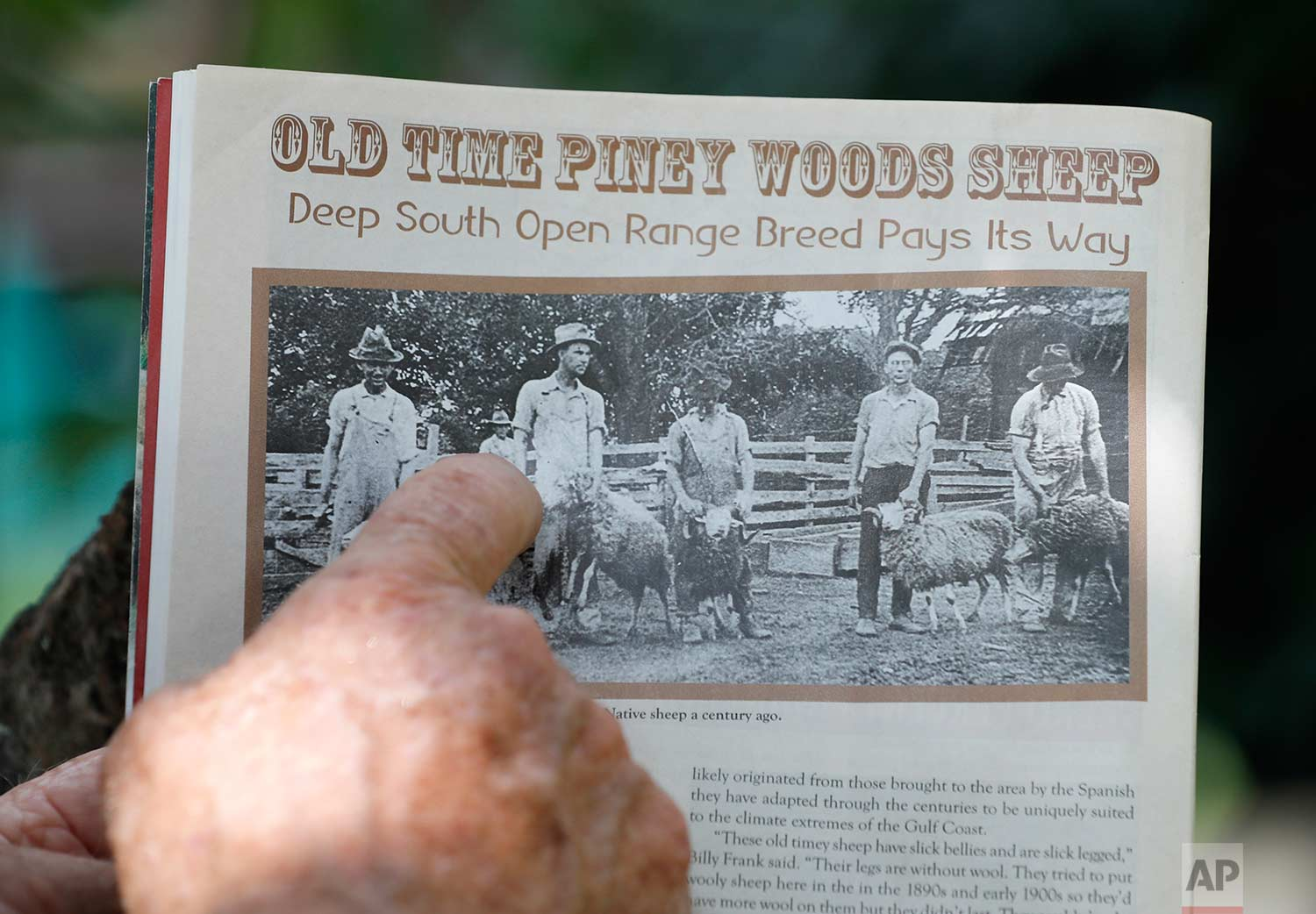 In this July 17, 2018, photo, Bill Frank Brown points out an ancestral photo from a trade magazine on his farm in Poplarville, Miss. (AP Photo/Gerald Herbert)