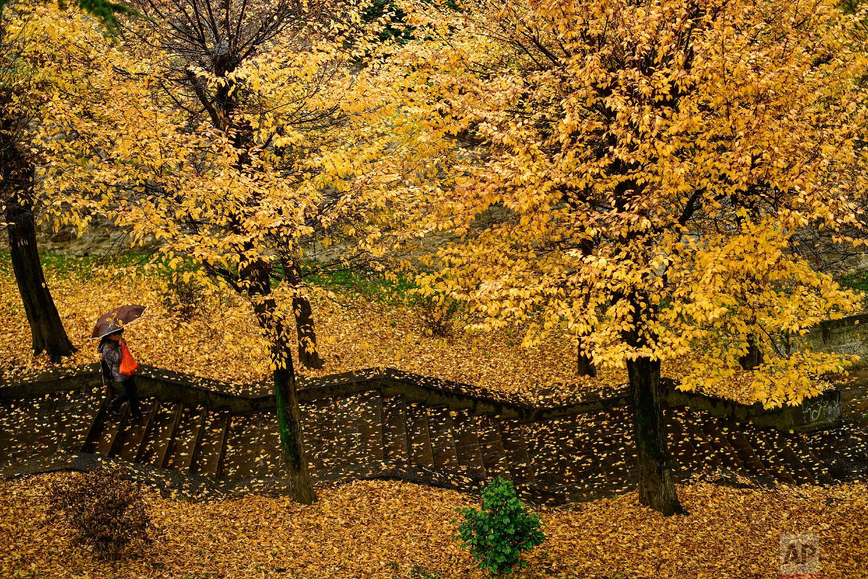 A pedestrian makes their way down a stairway through a row of trees during a rainy autumn day, in Pamplona, northern Spain, Tuesday, Nov. 20, 2018. (AP Photo/Alvaro Barrientos)