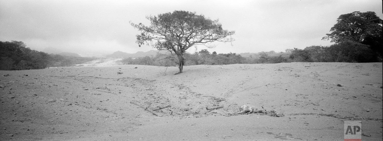 "Volcanic ash blankets the disaster zone near the Volcan de Fuego, or ""Volcano of Fire,"" June 5, 2018, in San Miguel Los Lotes, Escuintla, Guatemala. (AP Photo/Rodrigo Abd)"