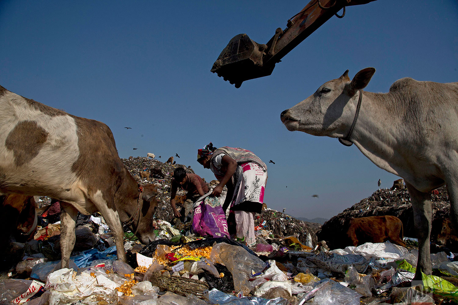 In this Monday, Dec. 10, 2018 photo, Indian ragpickers search recyclable materials at a garbage dumping site on the outskirts of Gauhati, India. (AP Photo/Anupam Nath)