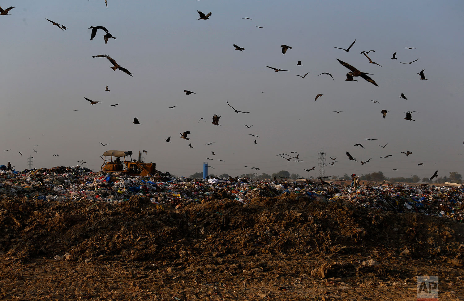 In this Tuesday, Dec. 4, 2018 photo, crows and black kites fly next to a tractor working on a garbage-dump on the outskirts of Islamabad, Pakistan. (AP Photo/Anjum Naveed)