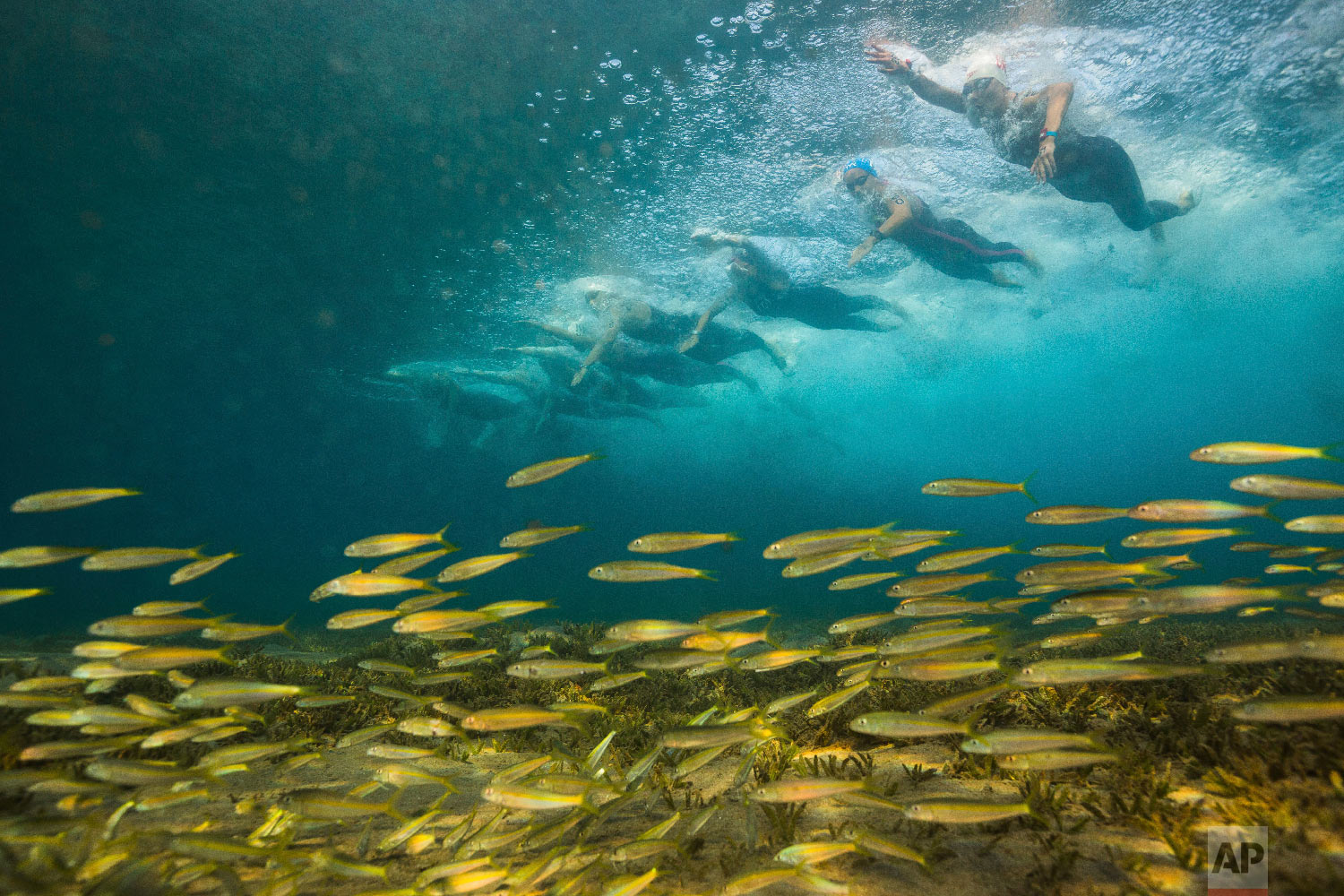 Swimmers compete at FINA World Junior Open Water Swimming Championships in Eilat, Israel on Sept. 7, 2018 (AP Photo/Gilad Kavalerchik)