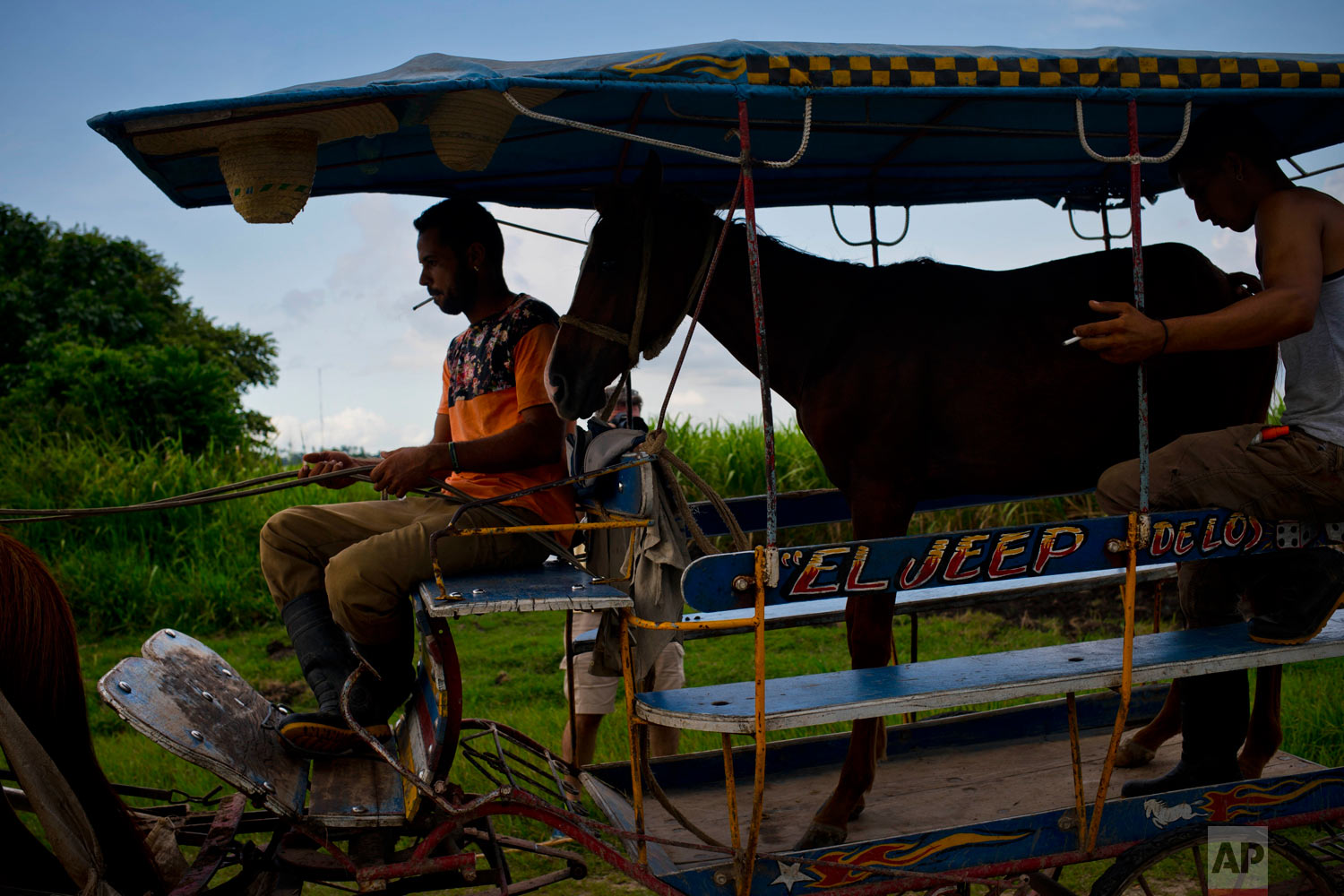 In this July 26, 2018 photo, a young horse is transported in a horse-drawn carriage along the main road of Camaguey, Cuba. The horse was carried to protect its soft hooves from the asphalt and prevent it from getting spooked by passing cars. (AP Photo/Ramon Espinosa)