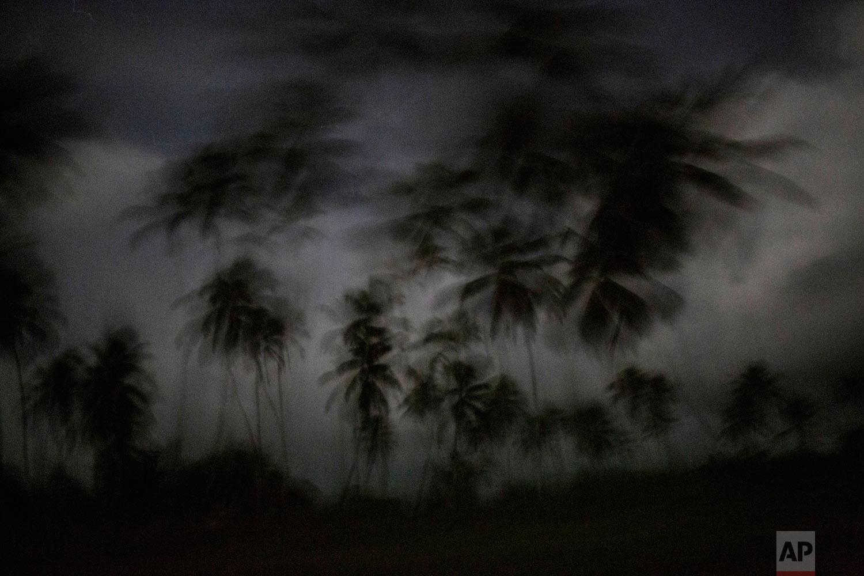 This Sept. 4, 2018 photo shows palm trees as the day begins to break in Irlaya, Honduras.  (AP Photo/Rodrigo Abd)