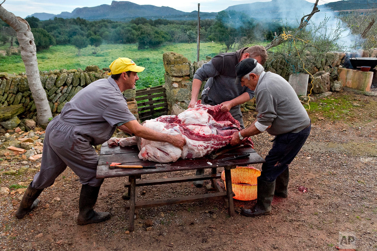 In this photo taken on Nov. 24, 2018, villagers dismember a pig during the annual pig slaughter near Petra, some 60 kilometres from Palma, the capital de Mallorca, Spain. (AP Photo/Francisco Ubilla)