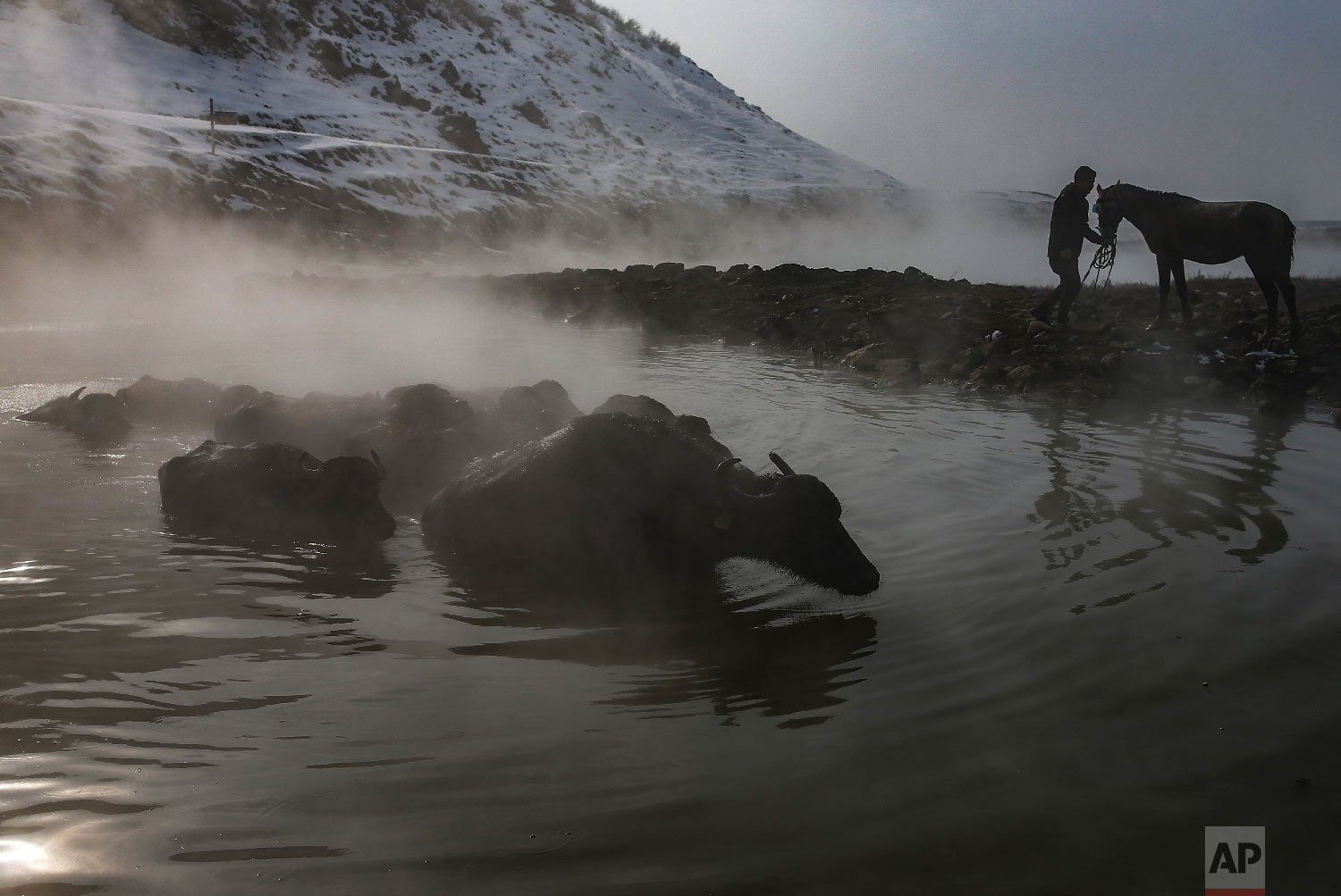 Water buffaloes bathe in a hot spring near the village of Budakli, in the mountainous Bitlis province of eastern Turkey, Thursday, Jan. 24, 2019. (AP Photo/Emrah Gurel)