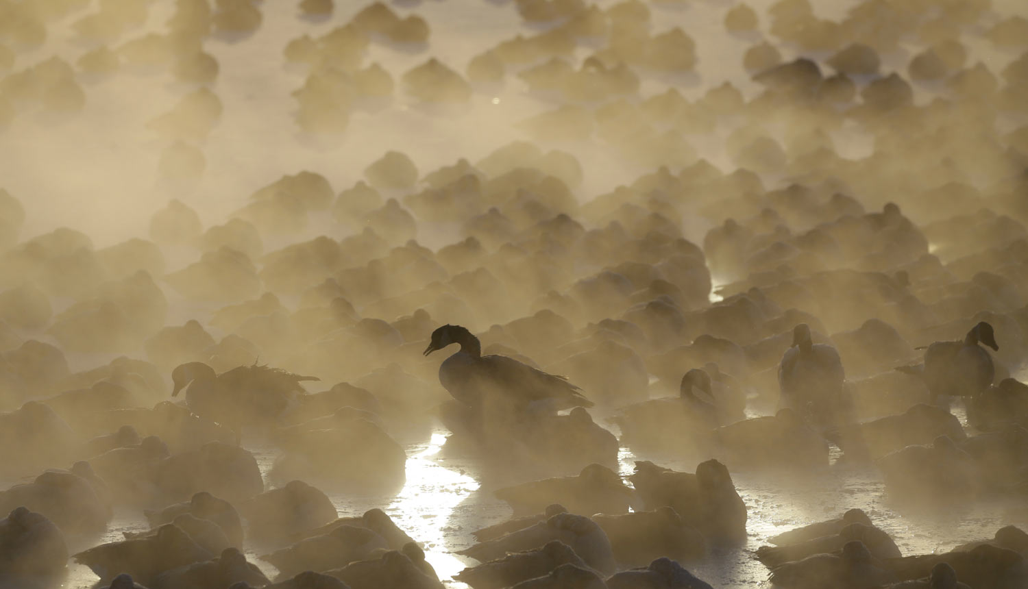Geese huddle together as the sun rises at the harbor in Port Washington, Wis., on Wednesday, Jan. 30, 2019. A deadly arctic deep freeze enveloped the Midwest with record-breaking temperatures. (AP Photo/Jeffrey Phelps)