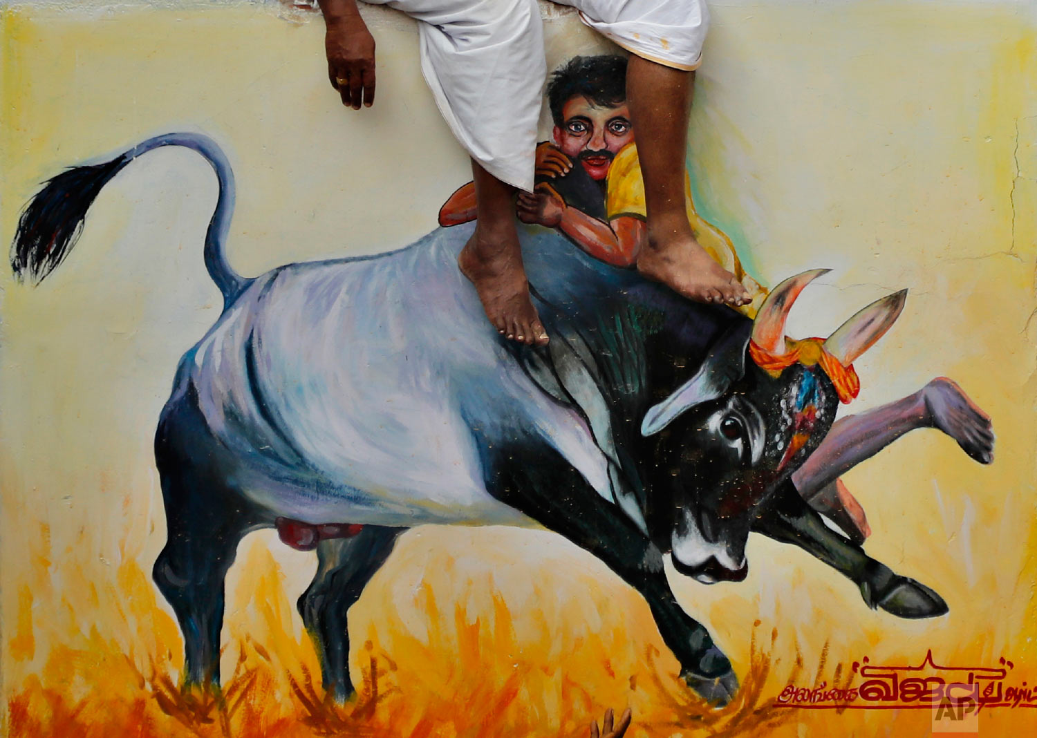 Legs of organizers dangle as they sit on a wall painted with a mural during a traditional bull-taming festival called Jallikattu, in the village of Allanganallur, near Madurai, Tamil Nadu state, India, Thursday, Jan. 17, 2019. (AP Photo/Aijaz Rahi)
