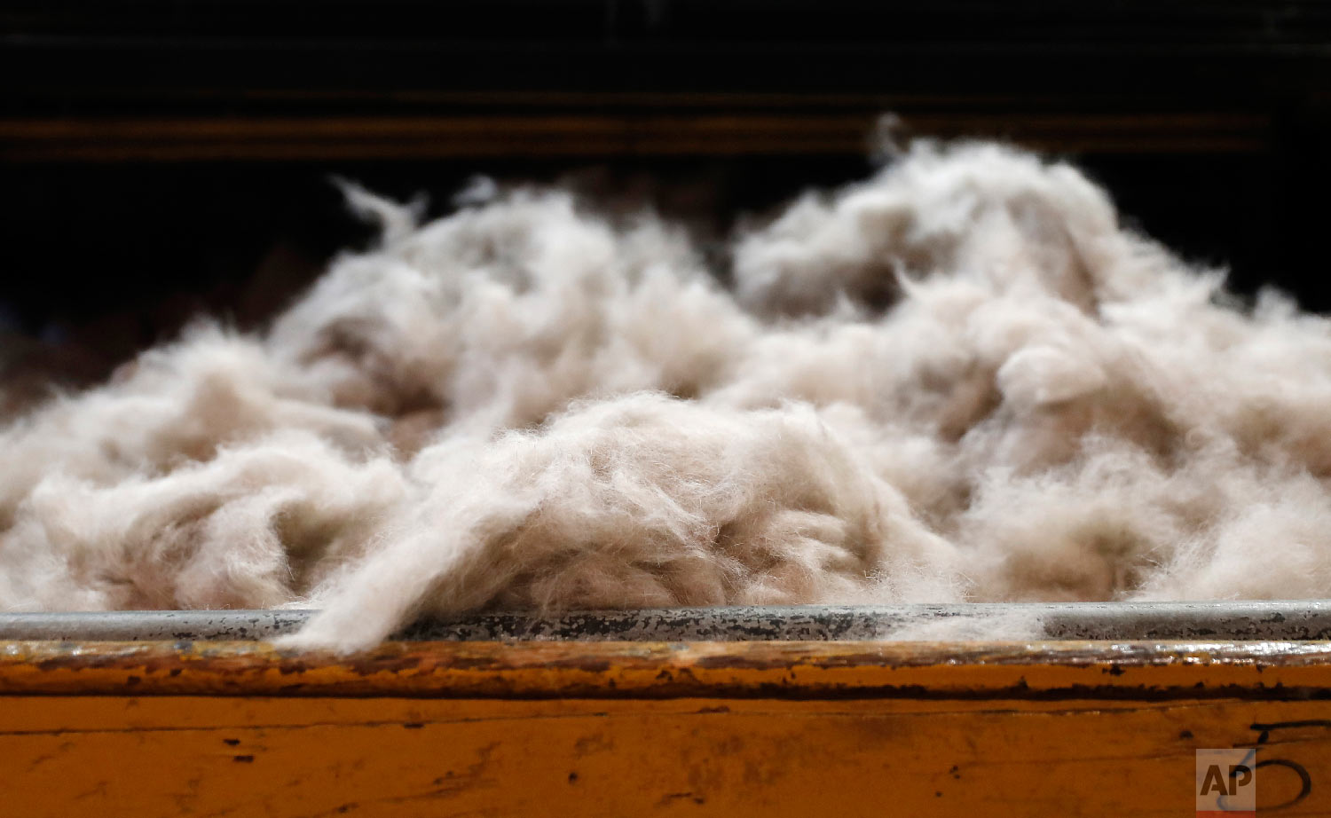 Rabbit fur to be moulded into a hat sits on a table at Borsalino's hat factory, in Spinetta Marengo, near Alessandria, Italy, Thursday, Jan. 17, 2019. (AP Photo/Antonio Calanni)
