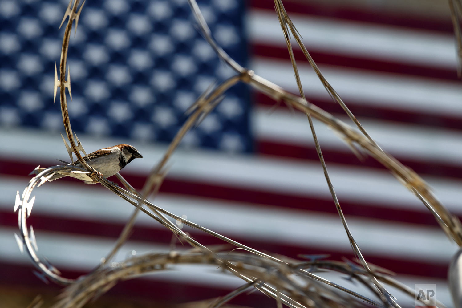 In this photo reviewed by U.S. military officials, a sparrow sits on razor wire at the Camp VI detention facility in Guantanamo Bay Naval Base, Cuba, on Wednesday, April 17, 2019. (AP Photo/Alex Brandon)