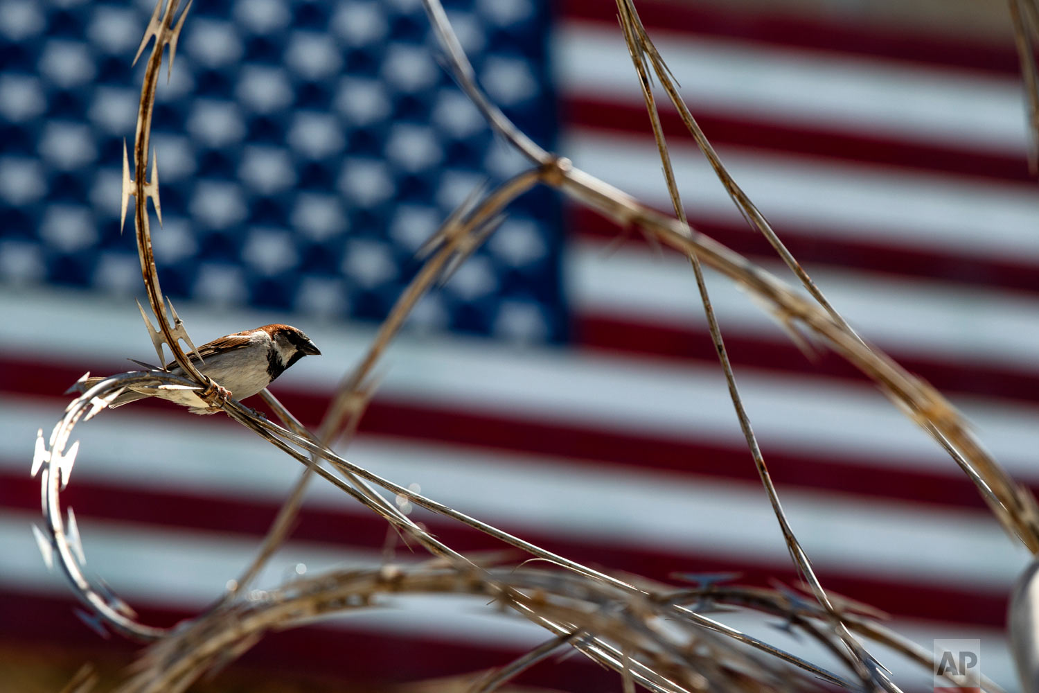 In this photo reviewed by U.S. military officials, a sparrow sits on the razor wire of the Camp VI detention facility, April 17, 2019, in Guantanamo Bay Naval Base, Cuba. (AP Photo/Alex Brandon)