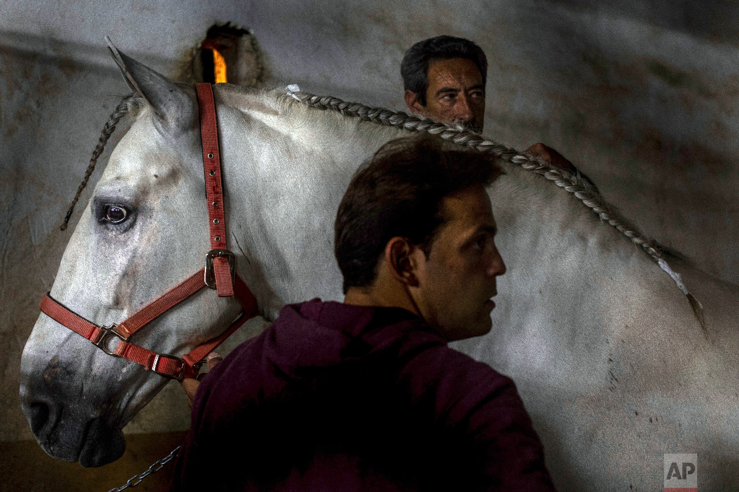 "Antonio Torres and Niky Alcazar braid the mane of Rociero, a Spanish pure breed that they hope can win the competition for best cloak during the annual fiesta called ""Los Caballos del Vino,"" usually translated as the Running of the Wine Horses in Caravaca de la Cruz, southeast Spain, Thursday, May 2, 2019. (AP Photo/Bernat Armangue)"
