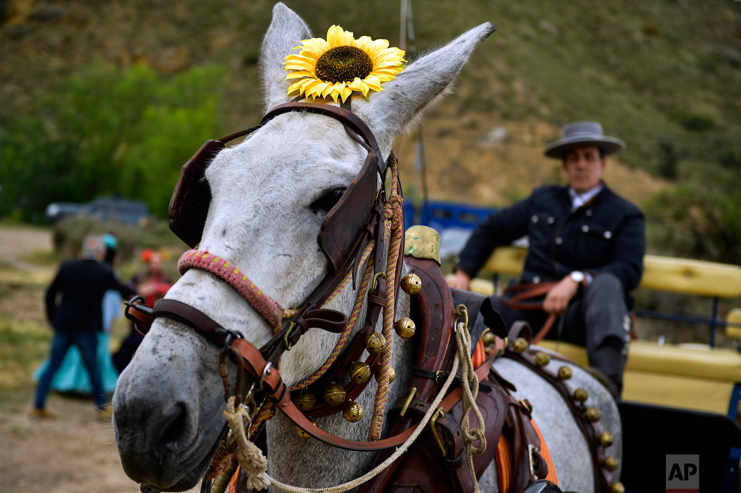 "A devotee of the Rocio Virgin takes part in the ""Romeria de El Rocio"" in the countryside outside Fitero, northern Spain, May 25, 2019. (AP Photo/Alvaro Barrientos)"