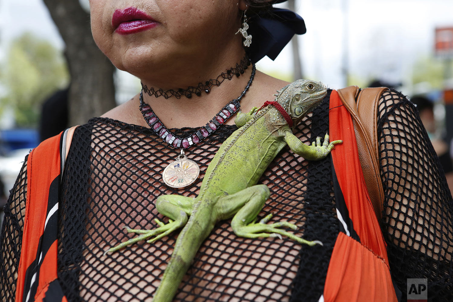 """Karla Esperanza, a transgender sex worker, poses for a photo with her iguana named """"Rectilio"""" on International Sex Workers Day in Mexico City, Mexico, Sunday, June 2, 2019. On Friday, Mexico City's government voted in favor of a bill that no longer allows sex workers or their clients to be arrested or fined after a complaint. (AP Photo/Ginnette Riquelme)"""