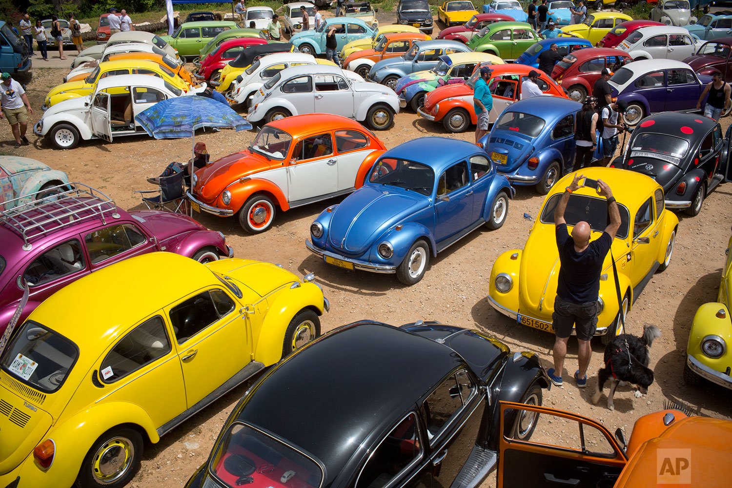 "Volkswagen Beetles displayed during the annual gathering of the ""Beetle club"" in Yakum, central Israel, April 21, 2017. (AP Photo/Oded Balilty)"