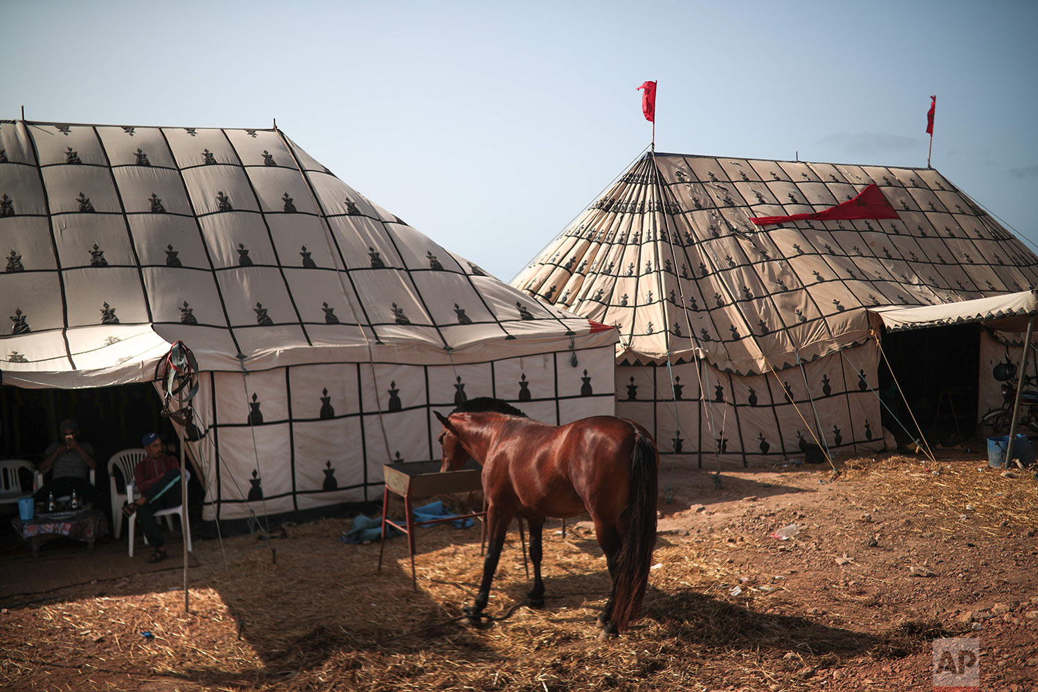 A horse feeds at a tent before it is prepared to take part in Tabourida, a traditional horse riding show also known as Fantasia, in the coastal town of El Jadida, Morocco, July 25, 2019. (AP Photo/Mosa'ab Elshamy)