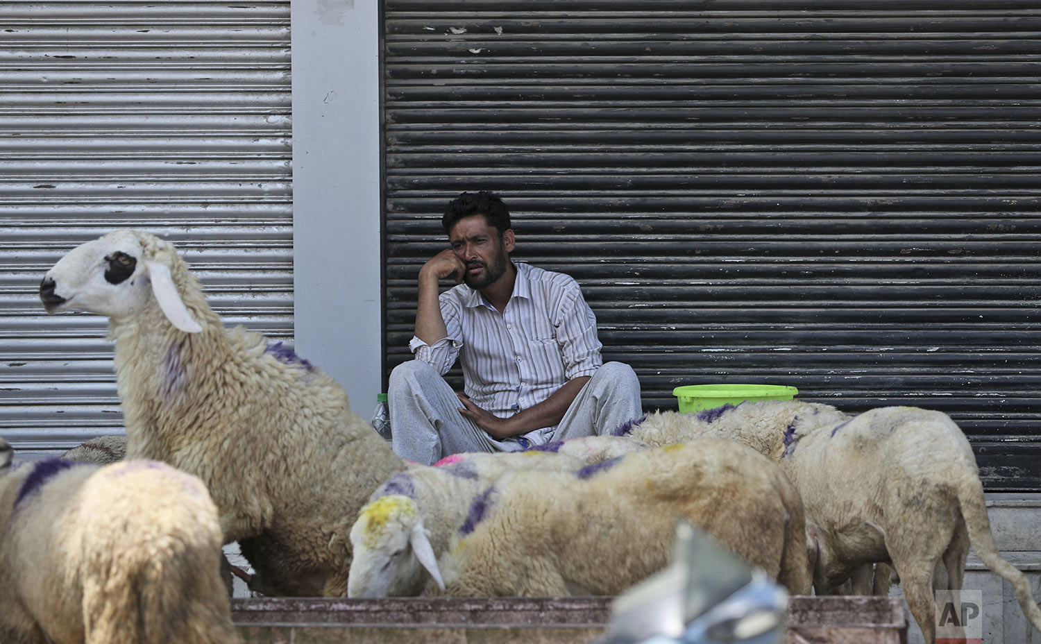 A Kashmiri livestock seller waits for customer ahead of Eid al Adha during curfew in Srinagar, Indian controlled Kashmiri, Friday, Aug. 9, 2019. (AP Photo/Mukhtar Khan)