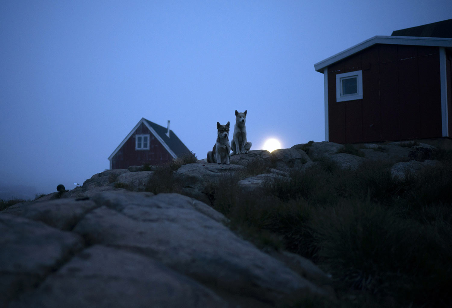 Dogs sit outside a home in Kulusuk, Greenland, early Thursday, Aug. 15, 2019. Greenland has been melting faster in the last decade and this summer, it has seen two of the biggest melts on record since 2012. (AP Photo/Felipe Dana)