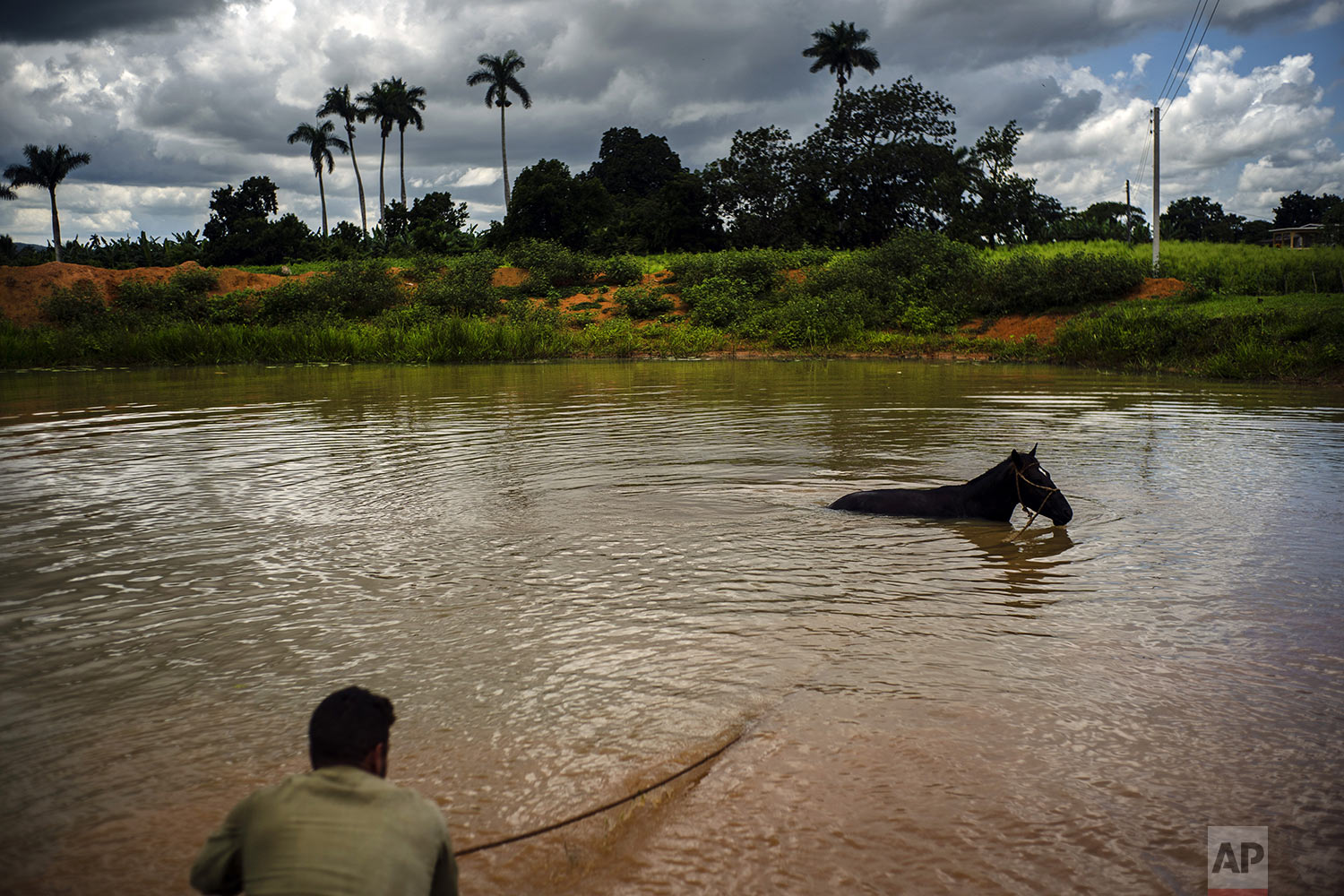 In this Aug. 24, 2019 photo, a man cools down his horse in a lagoon in El Infernal neighborhood in San Andres in the province of Pinar del Río, Cuba. (AP Photo/Ramon Espinosa)