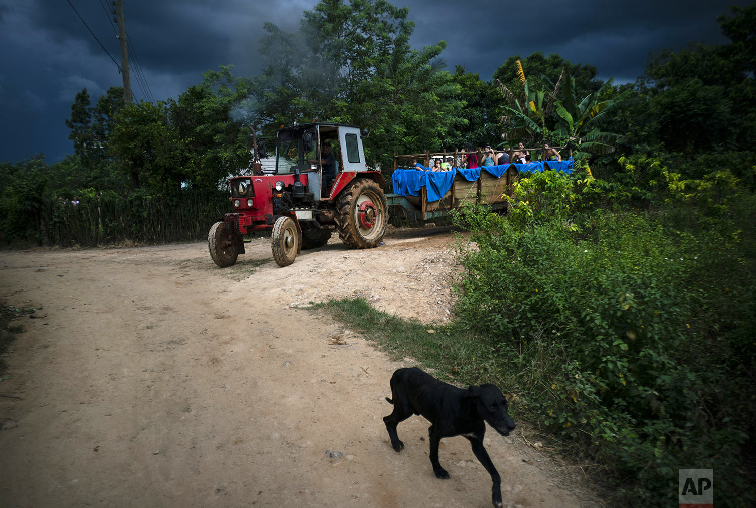 In this Aug. 24, 2019 photo, a dog named Danger walks in front of a tractor pulling a trailer converted into a pool, where children swim as it move along the roads of El Infernal neighborhood in San Andres in the province of Pinar del Río, Cuba. (AP Photo/Ramon Espinosa)
