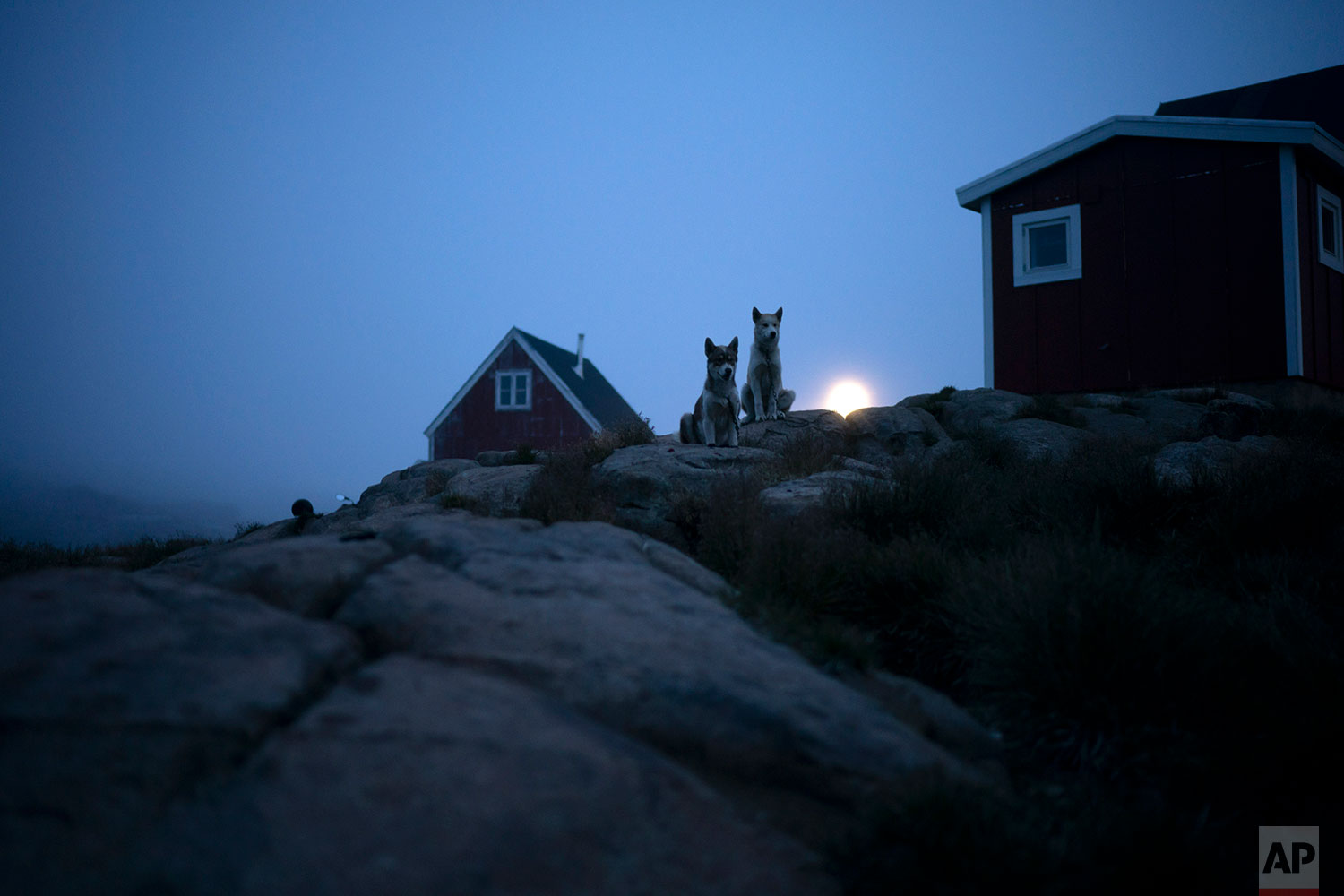 Dogs sit outside a home in Kulusuk, Greenland, Thursday, early Aug. 15, 2019. Greenland has been melting faster in the last decade and this summer, it has seen two of the biggest melts on record since 2012. (AP Photo/Felipe Dana)