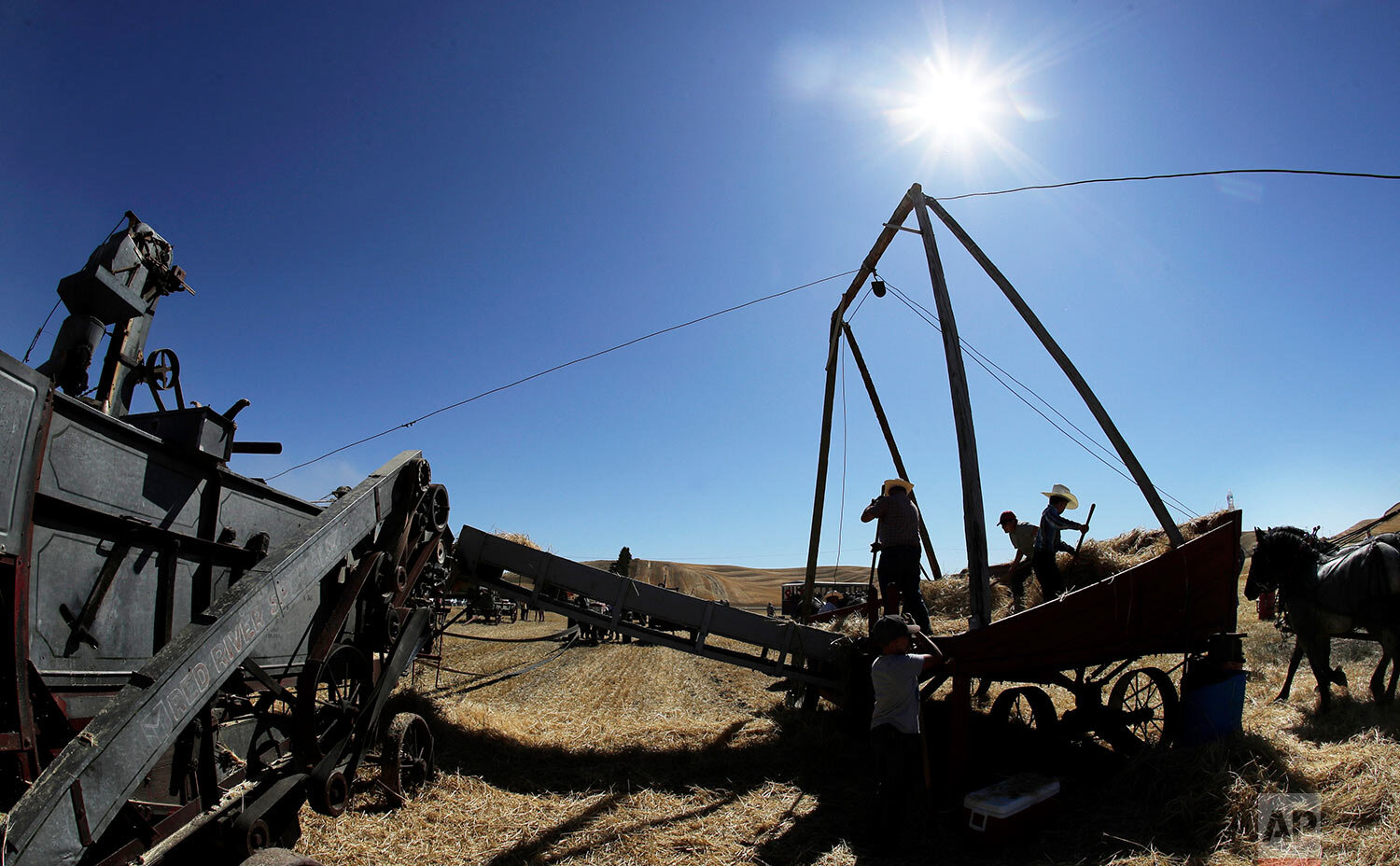 Workers use pitchforks to move cut barley from a wagon to a stationary grain thresher, left, near Colfax, Wash., Sept. 2, 2019. (AP Photo/Ted S. Warren)