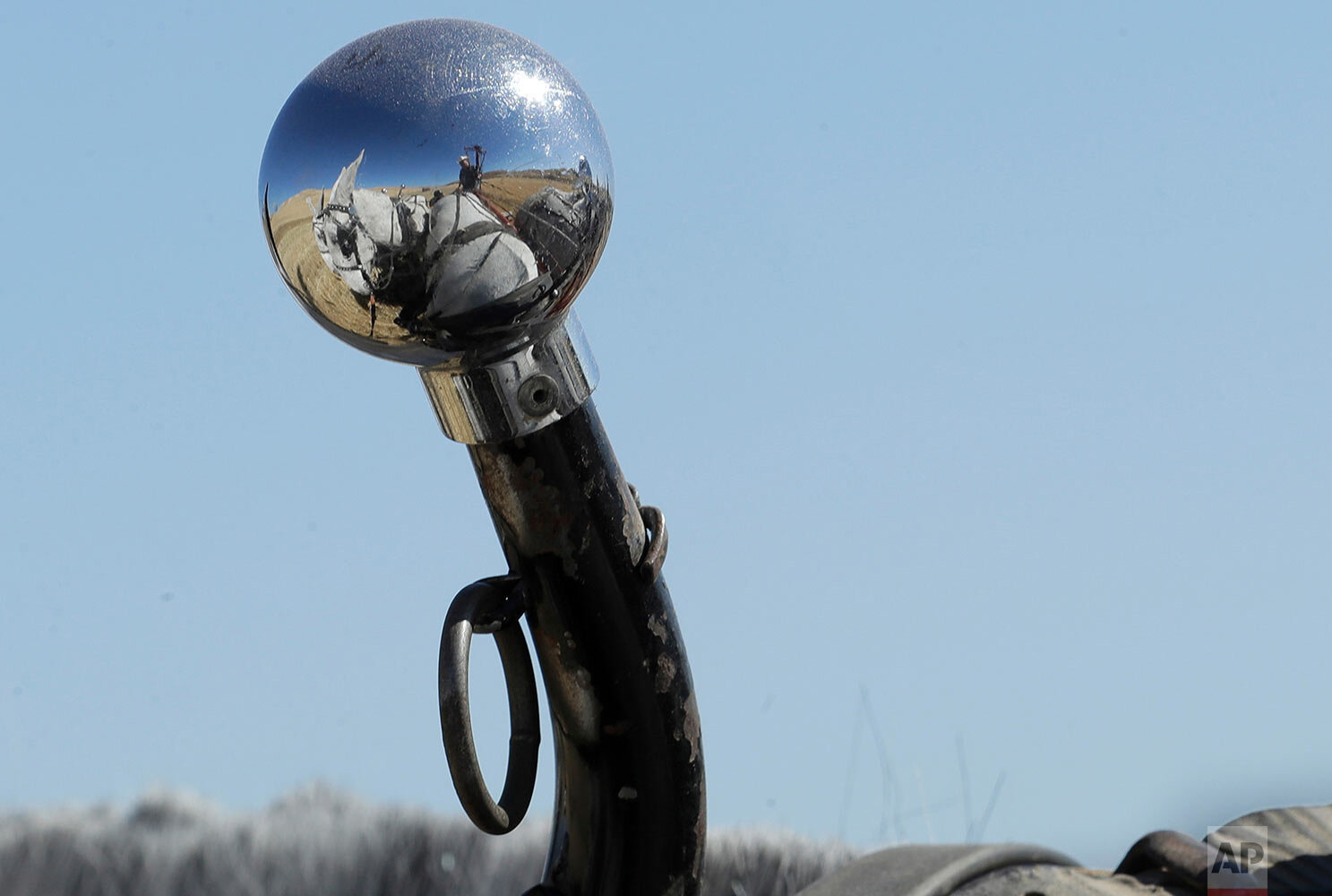 Stan Riebold is reflected in a chrome ball at the end of a hame stick on the collar of one of the mules in his team of six near Colfax, Wash., Sept. 2, 2019. (AP Photo/Ted S. Warren)