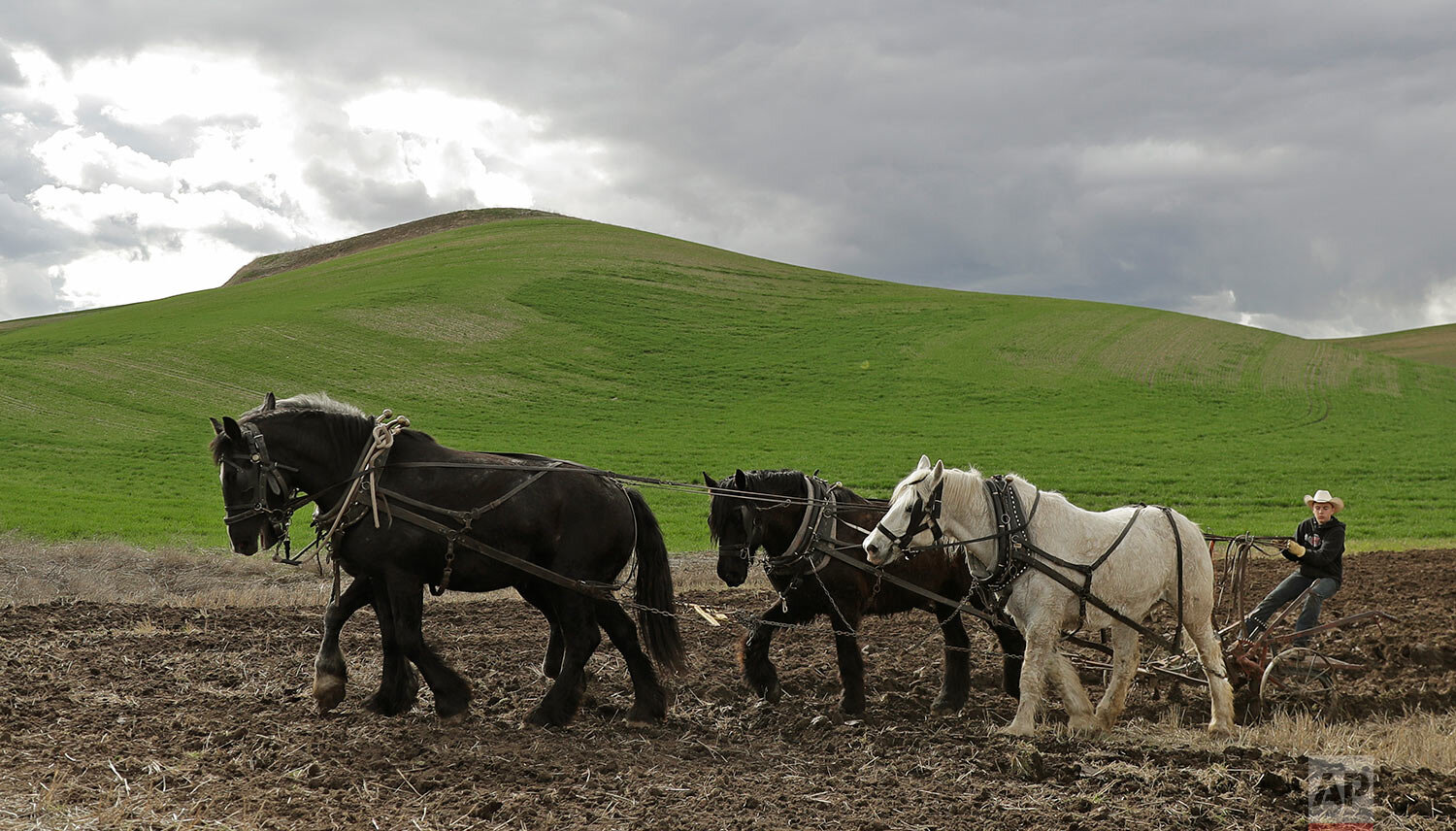 In this April 20, 2019 photo, Brennen Gonzalez, 14, uses a team of draft horses to plow farmland near Colfax, Wash., April 20, 2019. (AP Photo/Ted S. Warren)