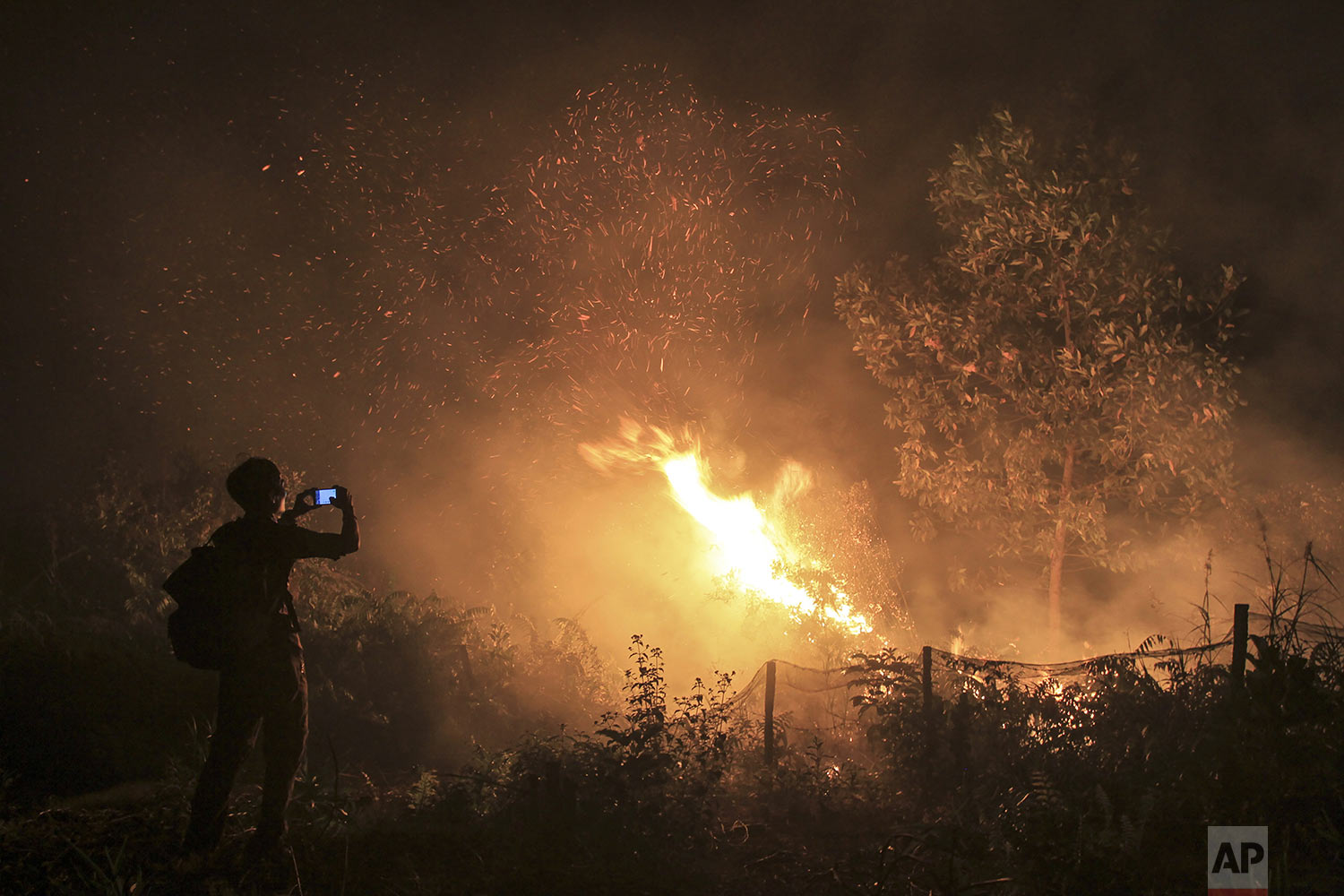 A man uses his mobile phone to take photos of a forest fire in Kampar, Riau province, Indonesia, Monday, Sept. 16, 2019. (AP Photo/Rafka Majjid)